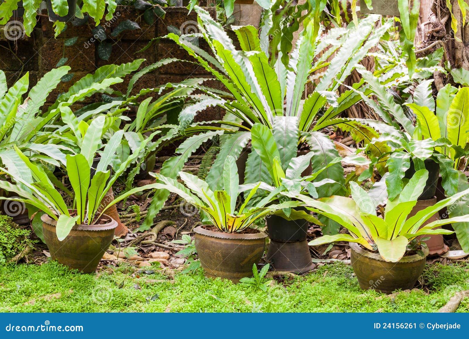 Tropikalna Paprociowa Ogrodowa Roślina Obraz Stock Obraz Złożonej