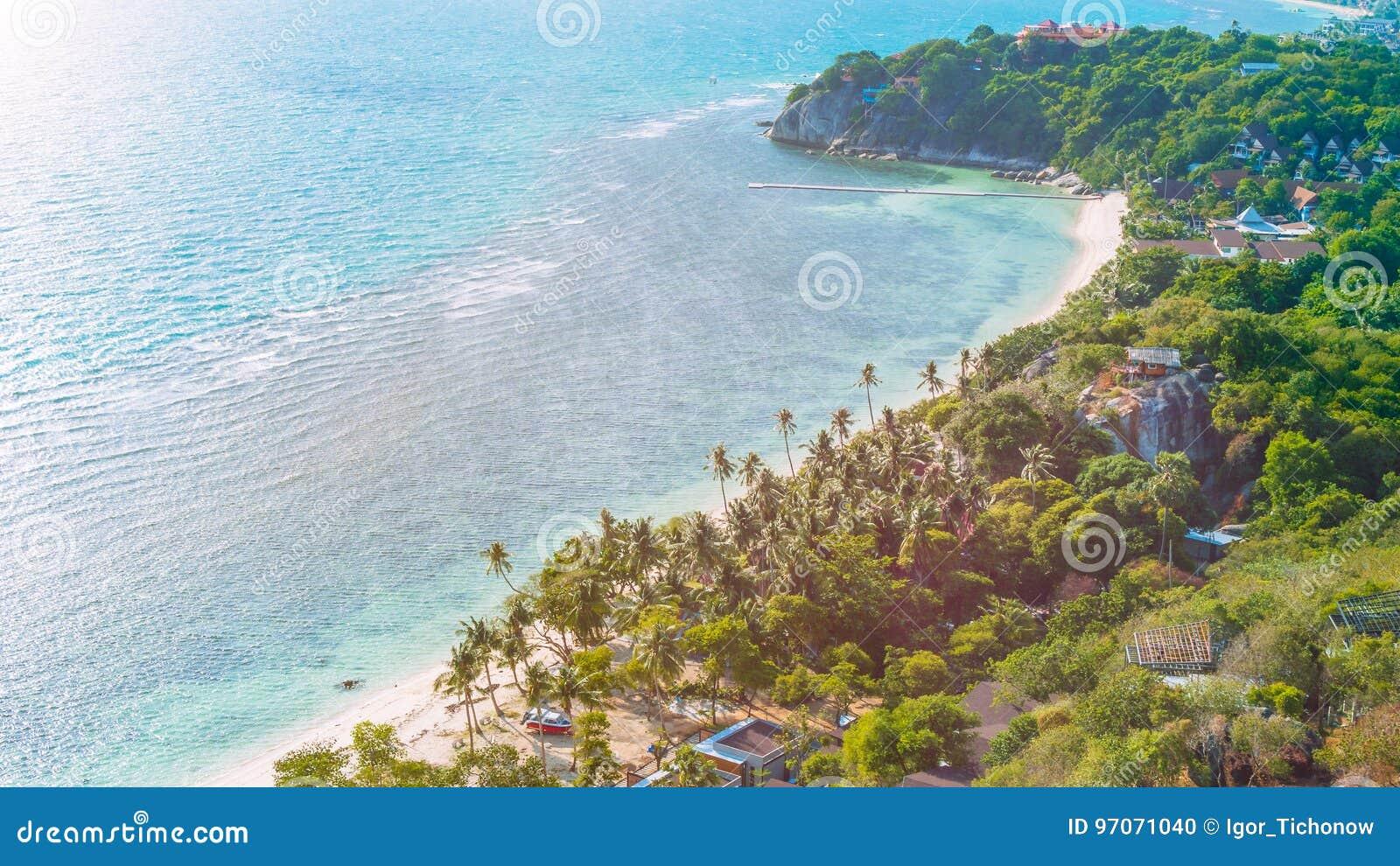 Tropikalna plaża z palmami na wietrznym dniu