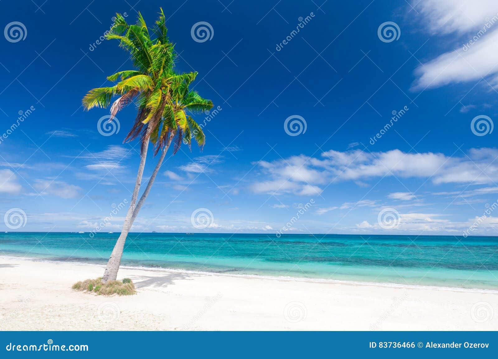 Tropikalna plażowa kokosowa palma