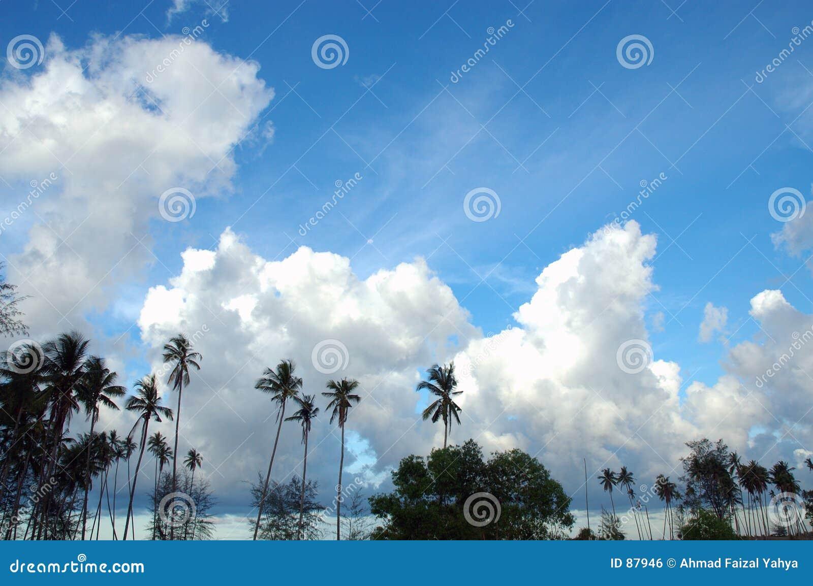 Tropikalne błękitne niebo