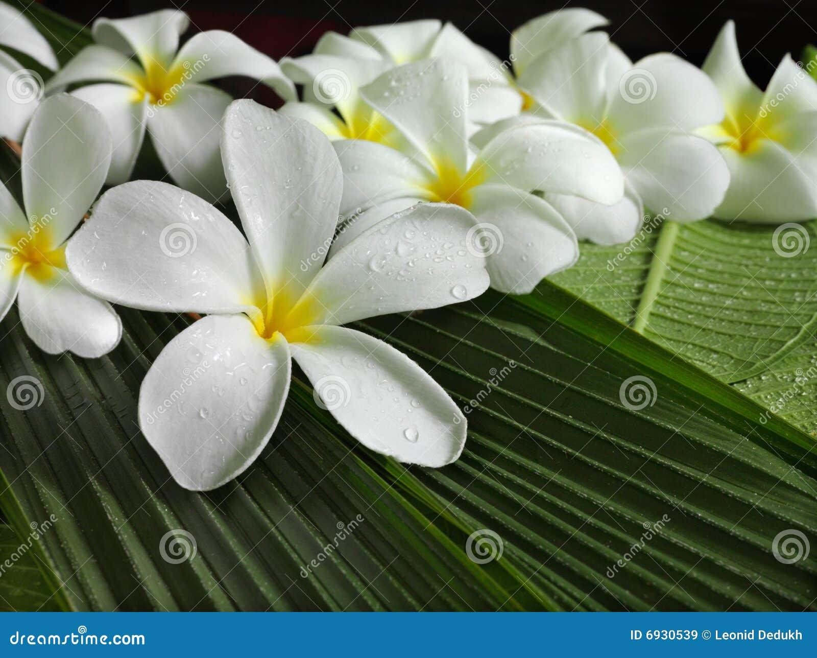 Tropikalni egzotyczni kwiaty