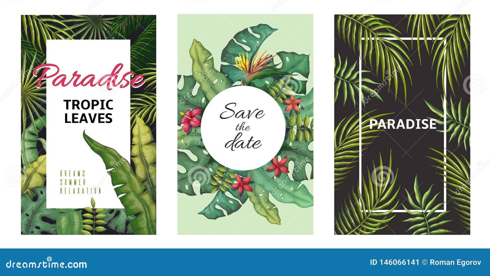 Tropikalni li?ci plakaty D?ungla zasadza lato ulotki, bananowy palmowego li?cia wz?r, ulistnienie projekt Wektorowy palmowego li?