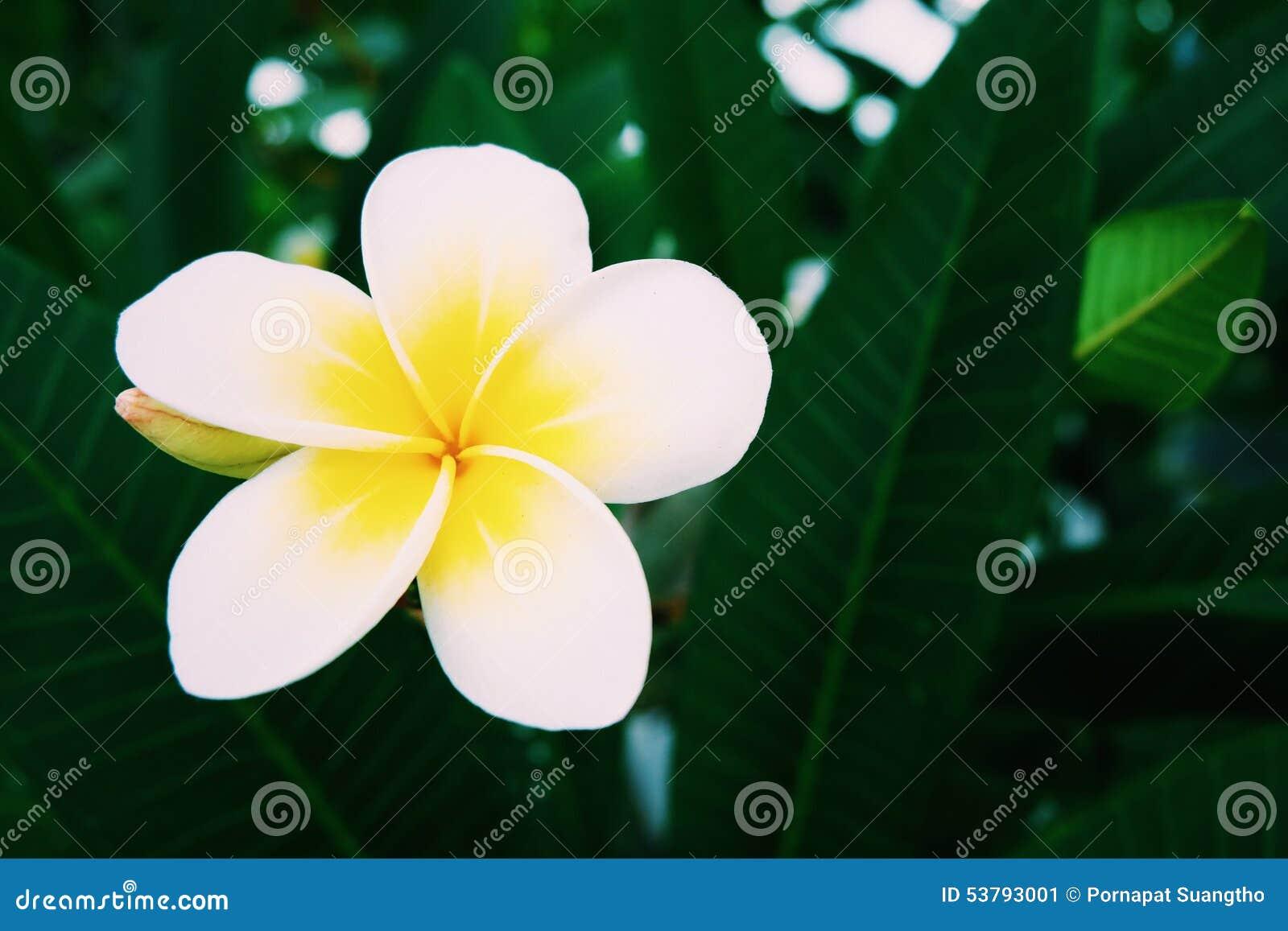 Tropikalny żółty kwiat