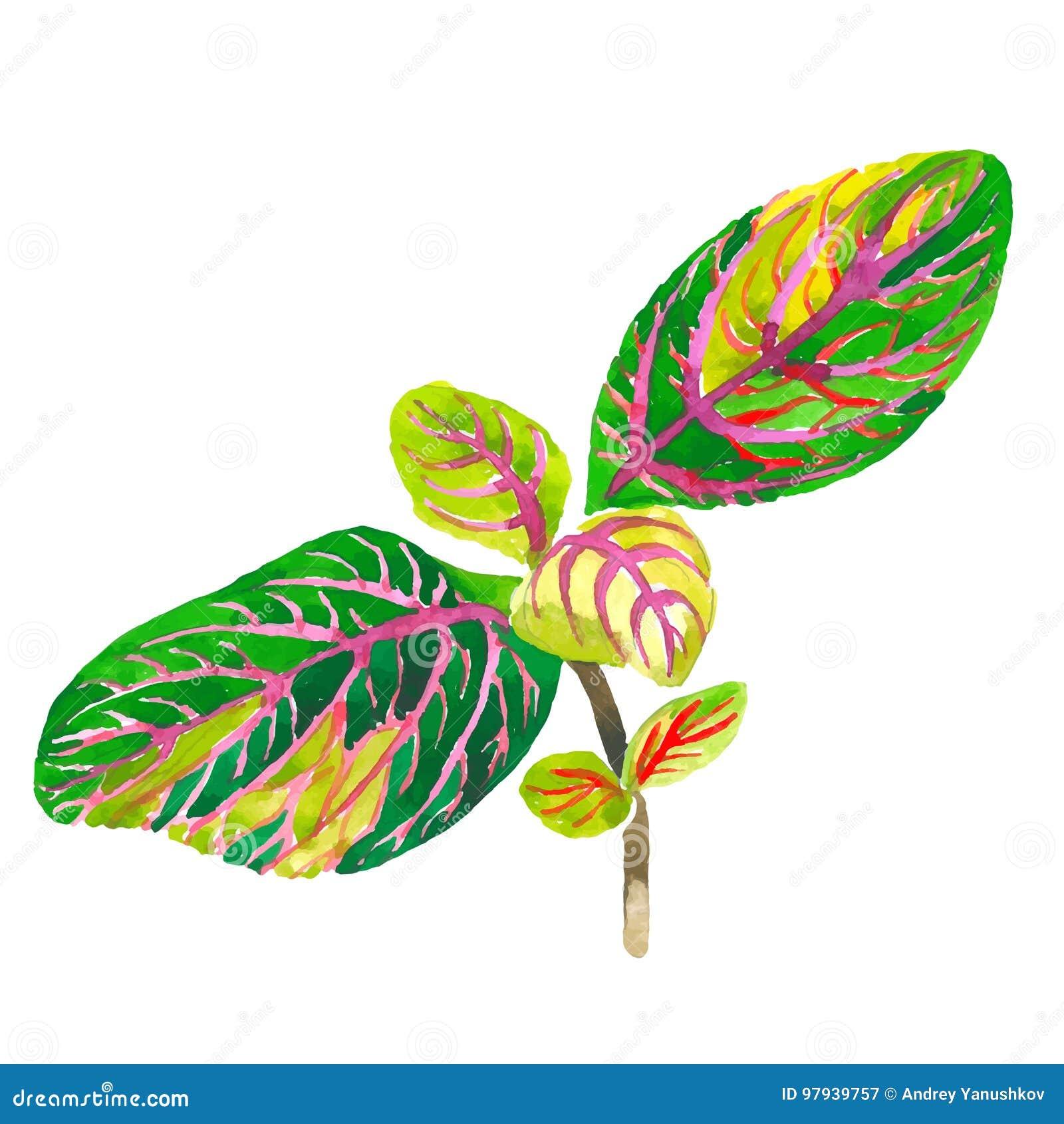 Tropikalny Hawaje liści drzewko palmowe w wektoru stylu odizolowywającym
