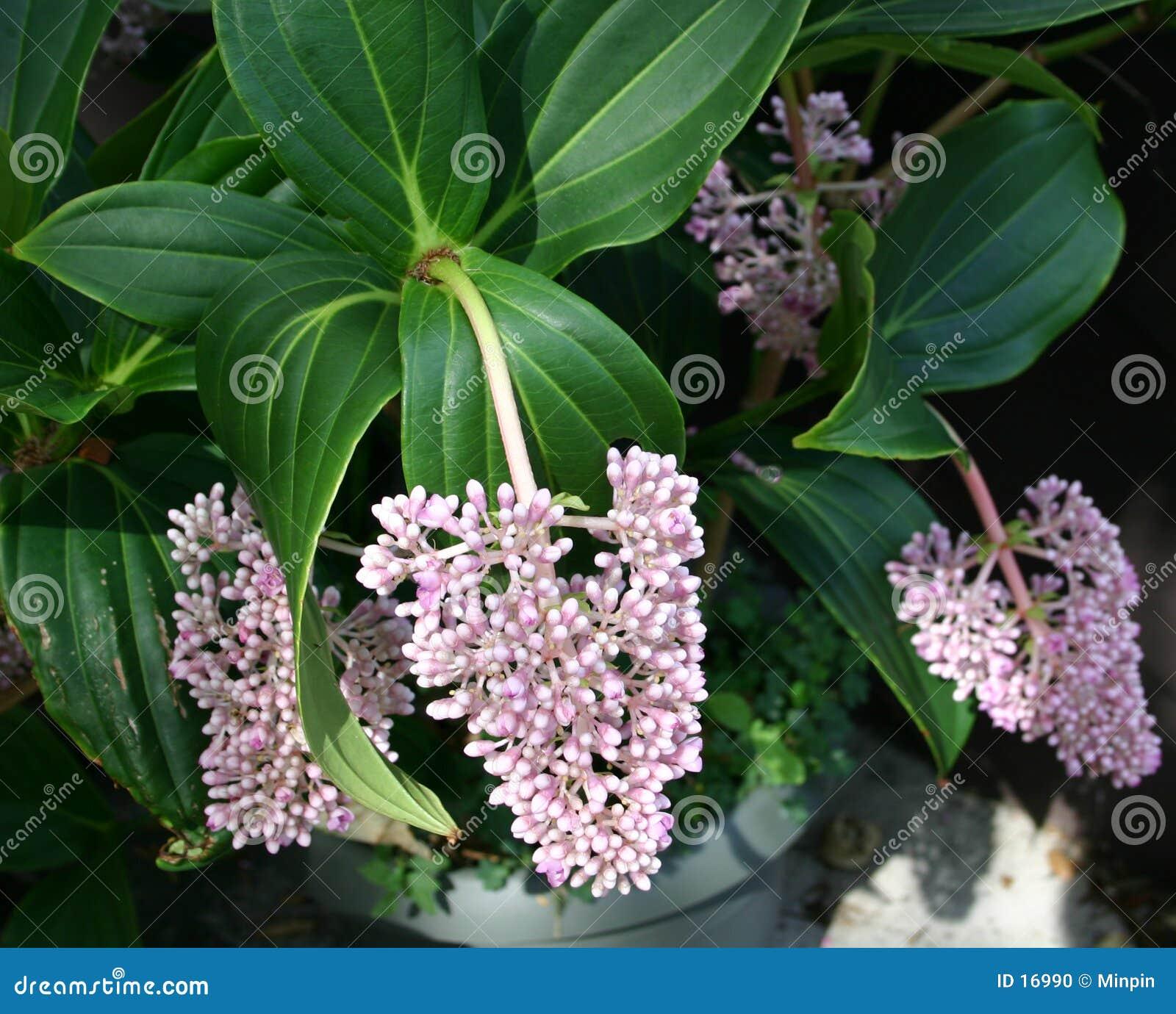 Tropikalny kwiat