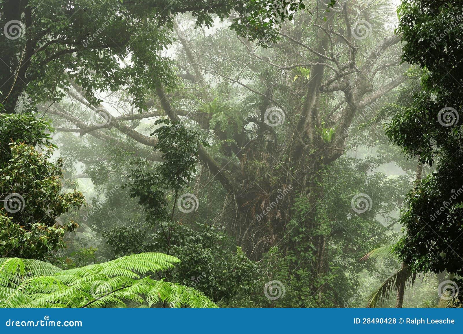 Tropikalny las deszczowy