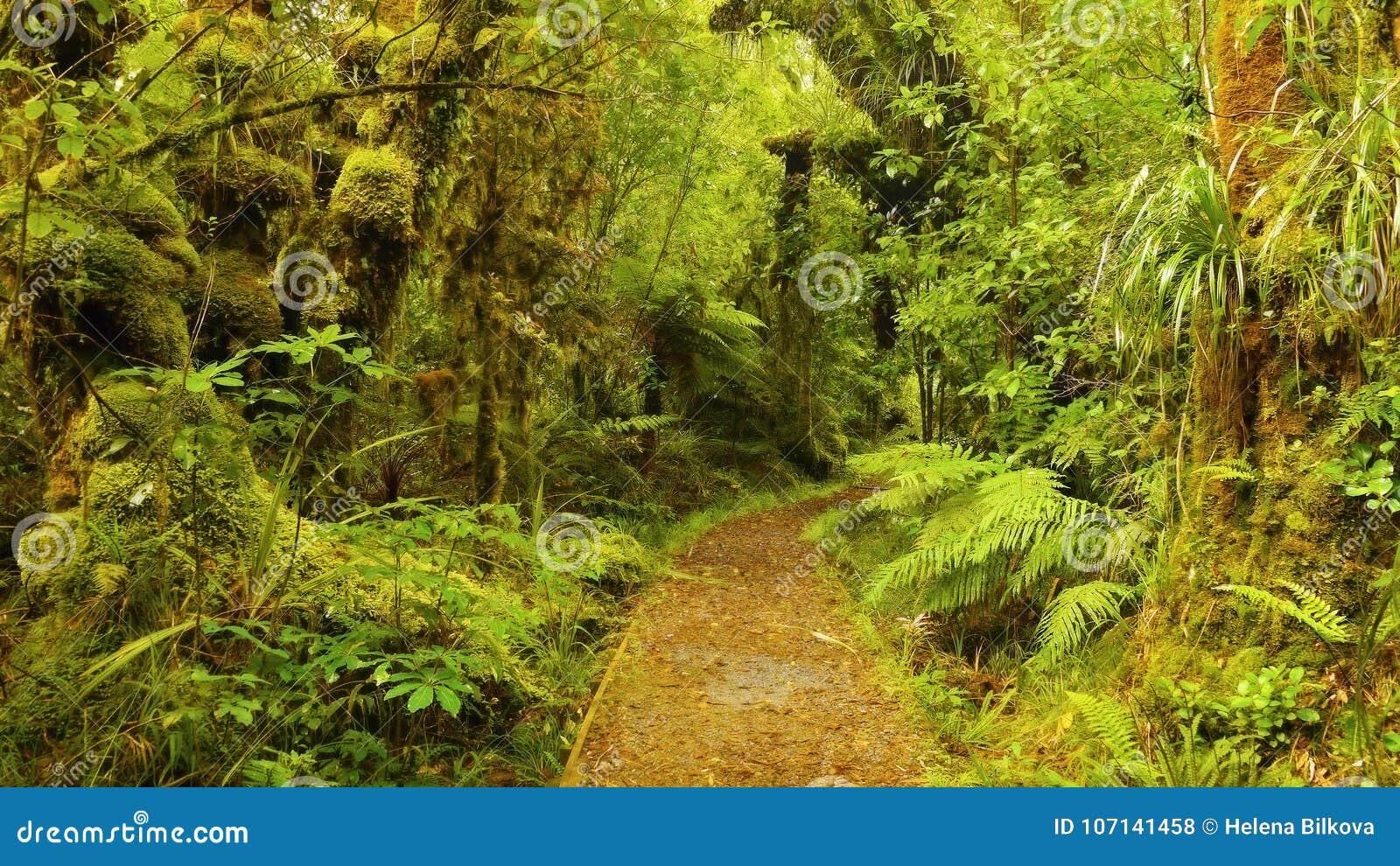 Tropikalny las deszczowy, Olimpijski park narodowy, Waszyngton