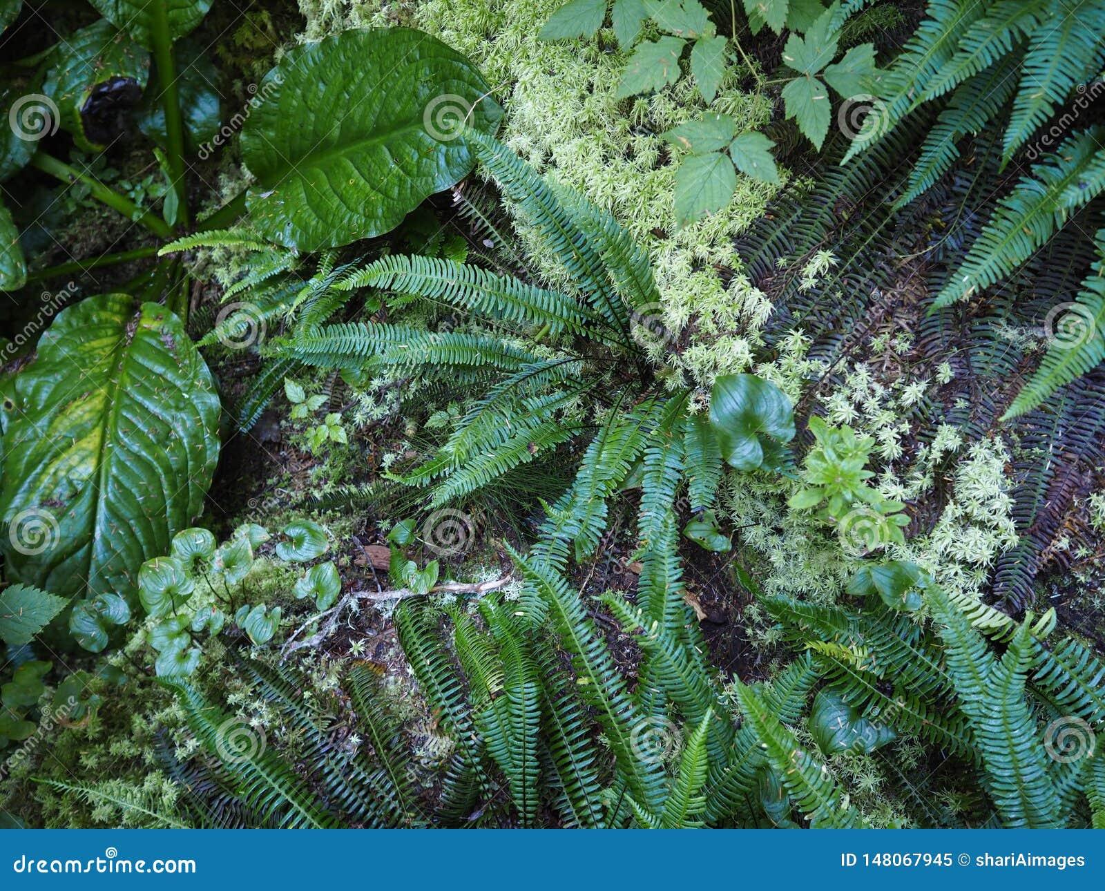 Tropikalny las deszczowy podłoga - cienie zieleń