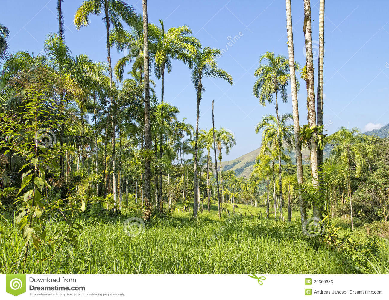 Tropikalny las deszczowy tropikalny