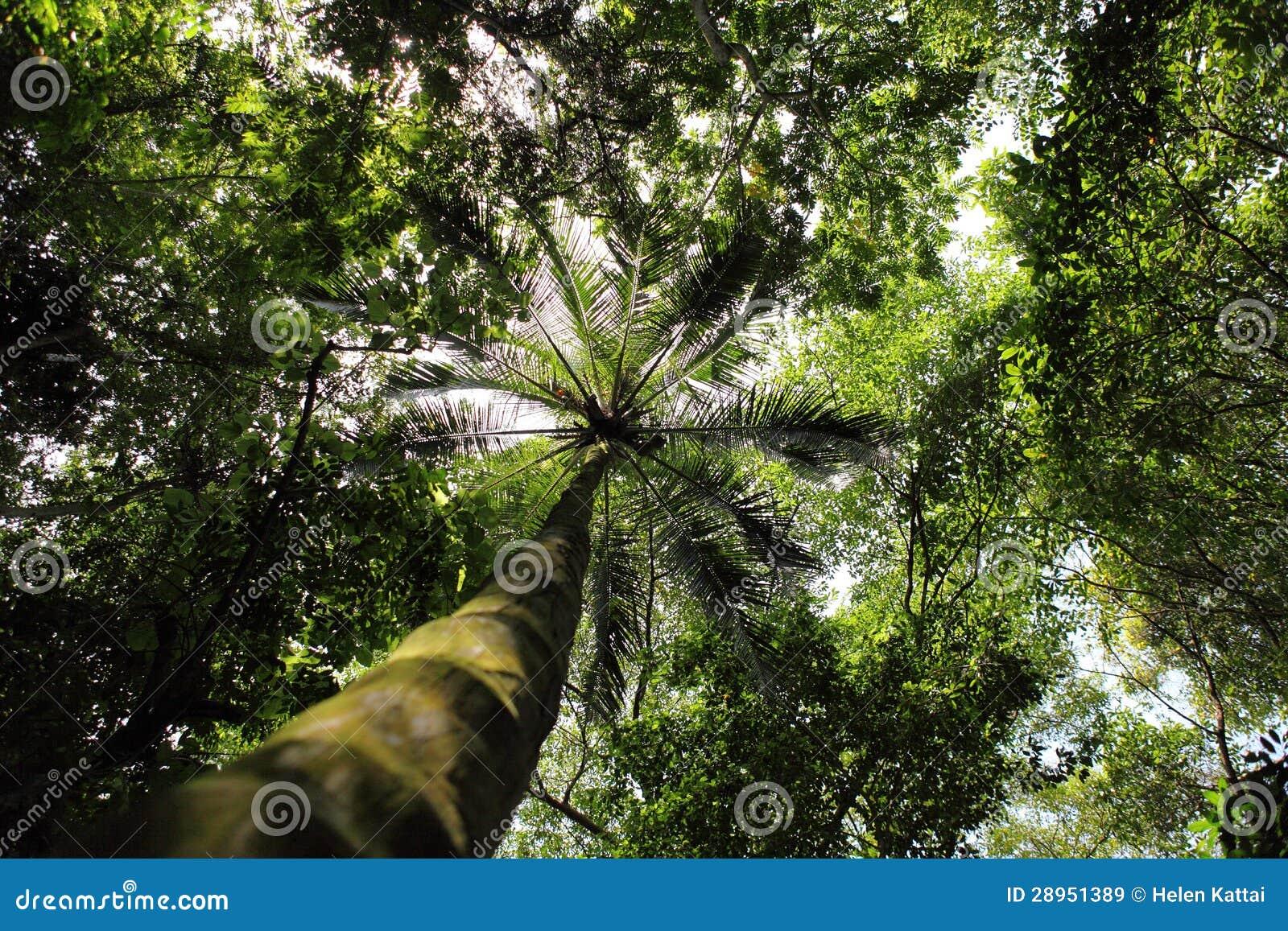 Tropikalny las wzdłuż morza karaibskiego