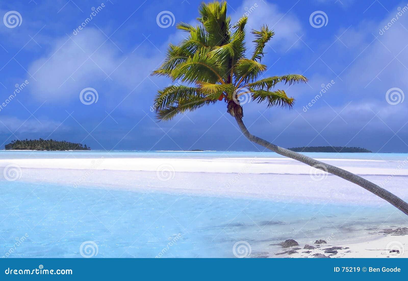 Tropikalny marzeń