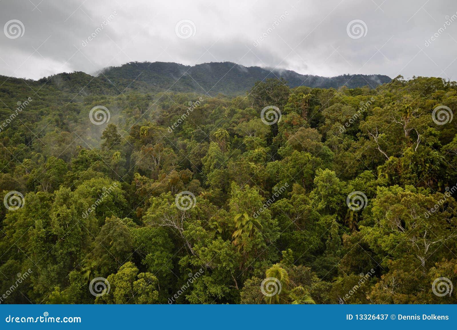Tropikalny Queensland tropikalny las deszczowy