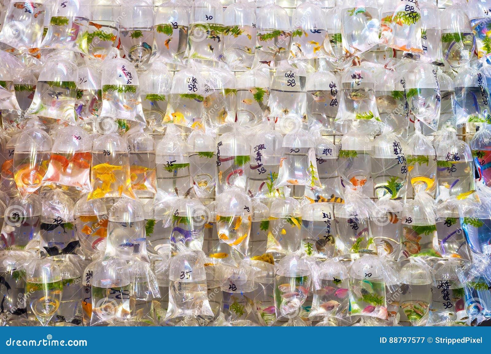Tropikalny rybi obwieszenie w plastikowych workach przy Mong Kok goldfish rynkiem, Dzwoniąca Choi ulica, Hong Kong