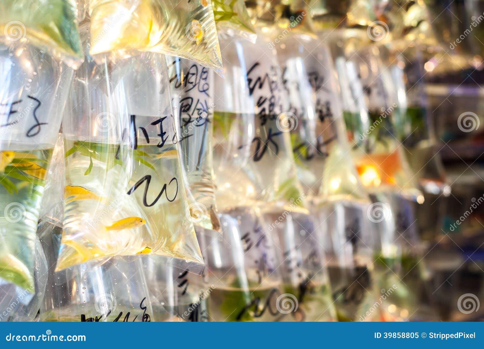 Tropikalny rybi obwieszenie w torbach przy Dzwonię Choi goldfish Ulicznym rynkiem, Hong Kong