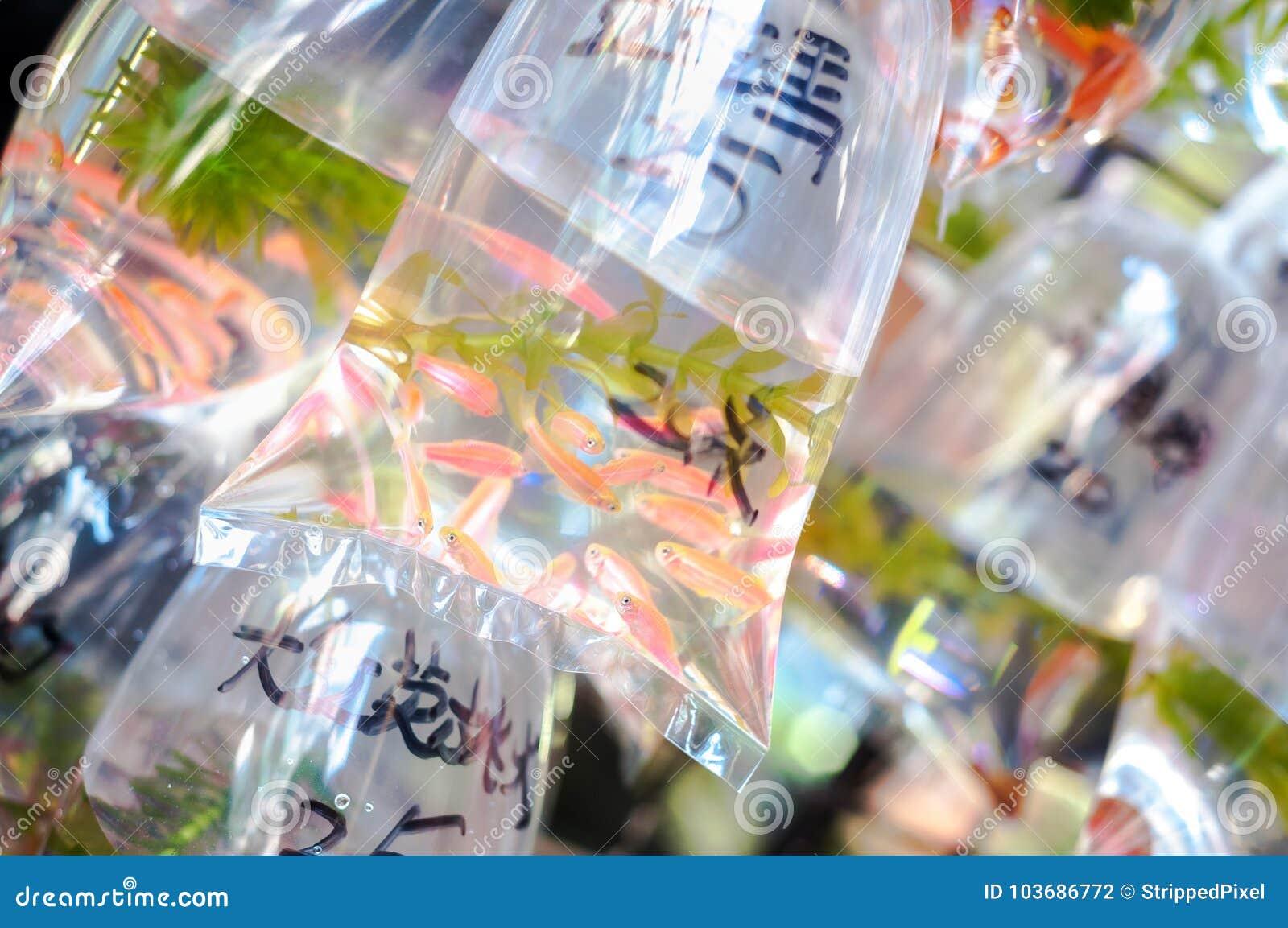 Tropikalny rybi zrozumienie w torbach na ` goldfish ulicznym ` w Hong Kong ` s Mong Kok okręgu