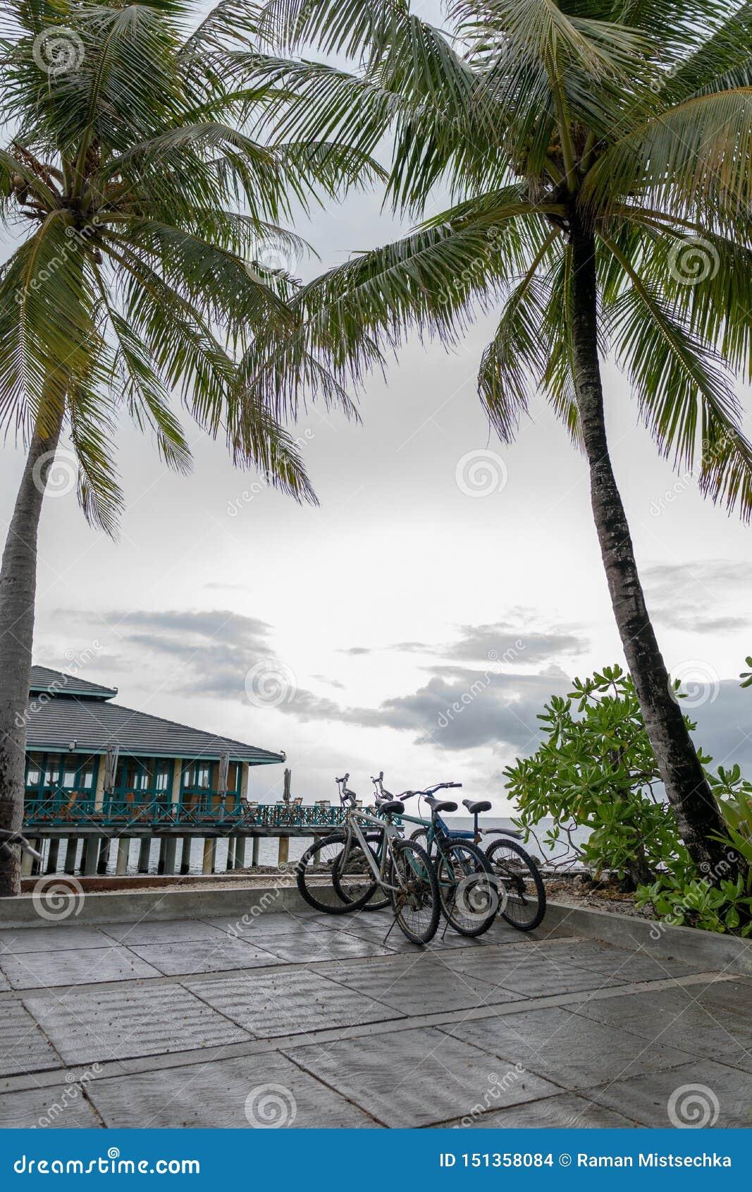 Tropikalny zmierzch z drzewkami palmowymi i bicyklem na pla?y, pionowo panorama
