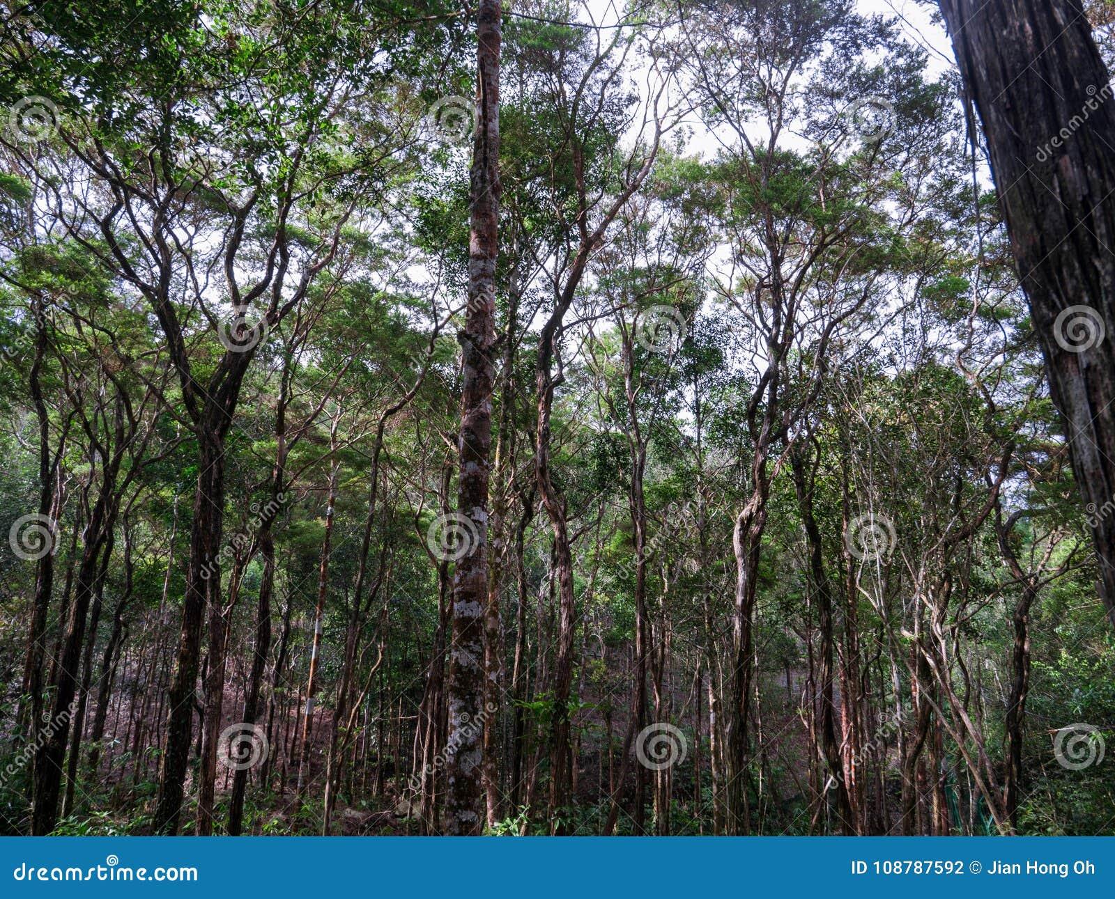 Tropisch bos van Maleisië