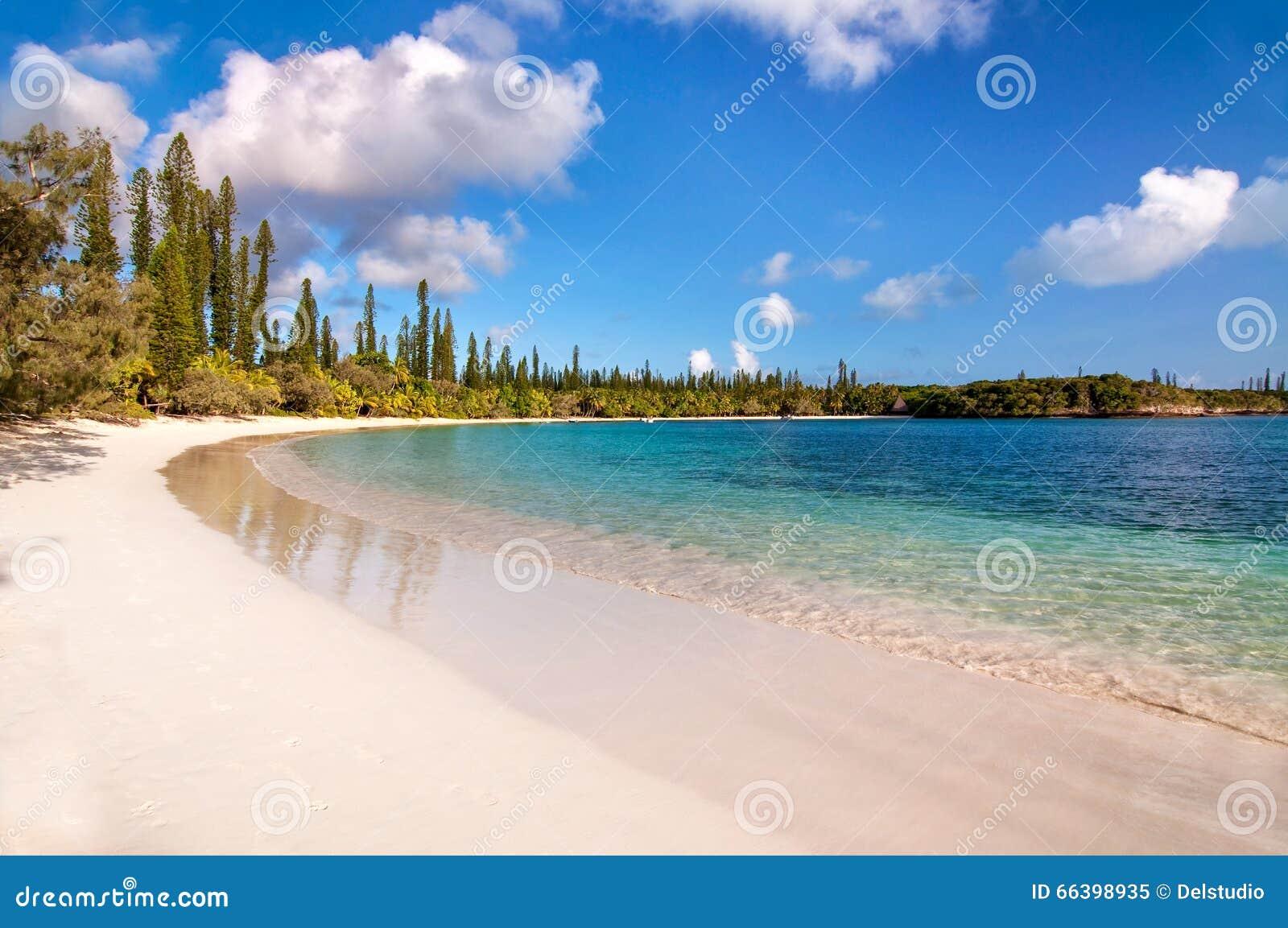 Tropisch strand, Eiland van Pijnbomen
