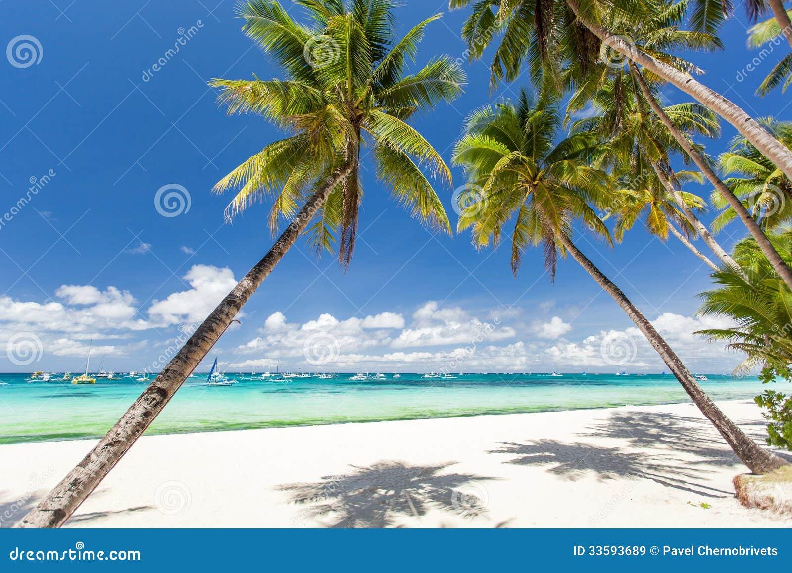 Tropisch strand met mooie palmen en wit zand