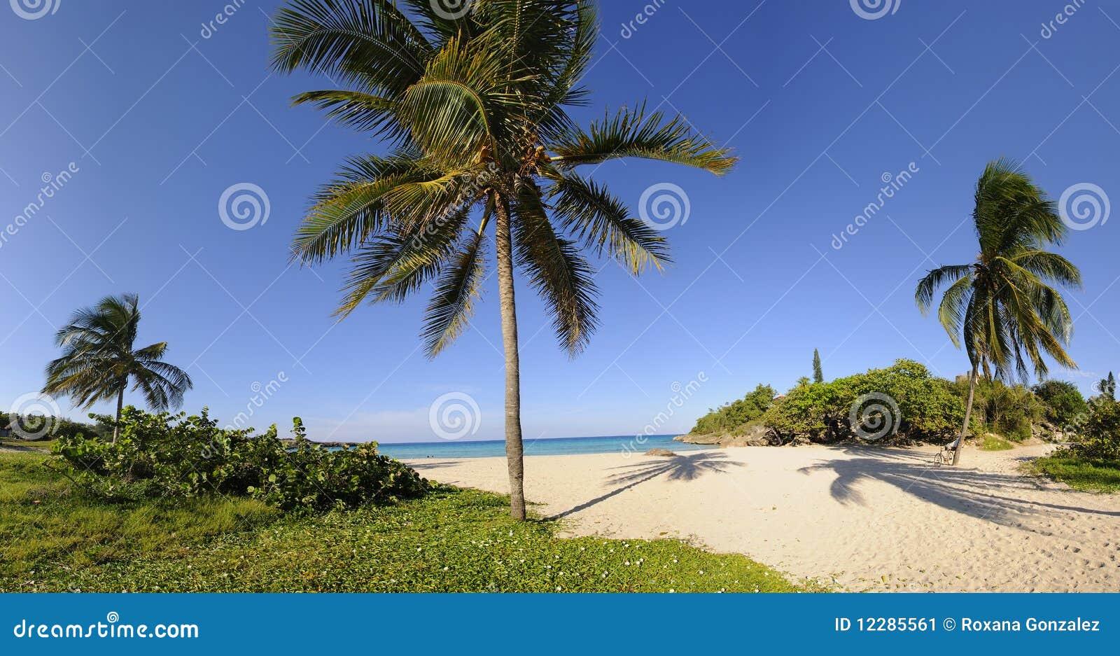 Tropisch strand met vegetatiepanorama
