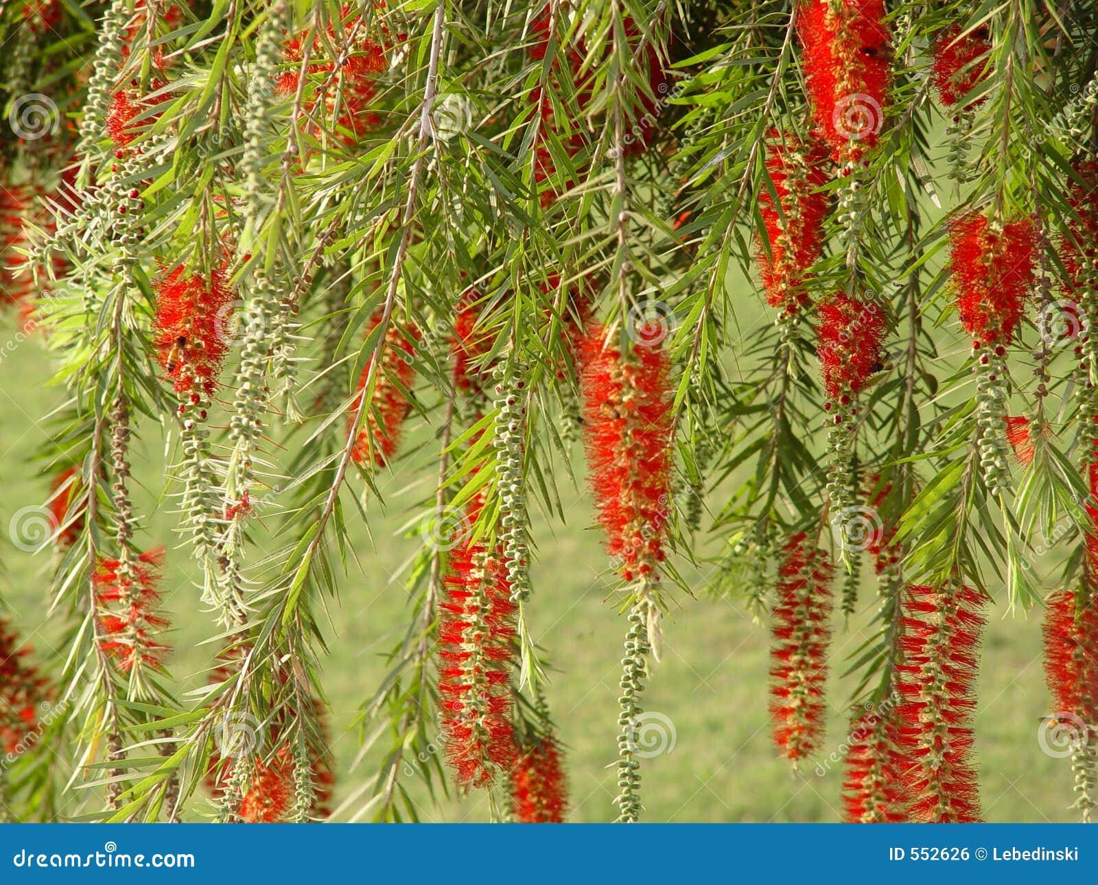 Tropische bloemen van India