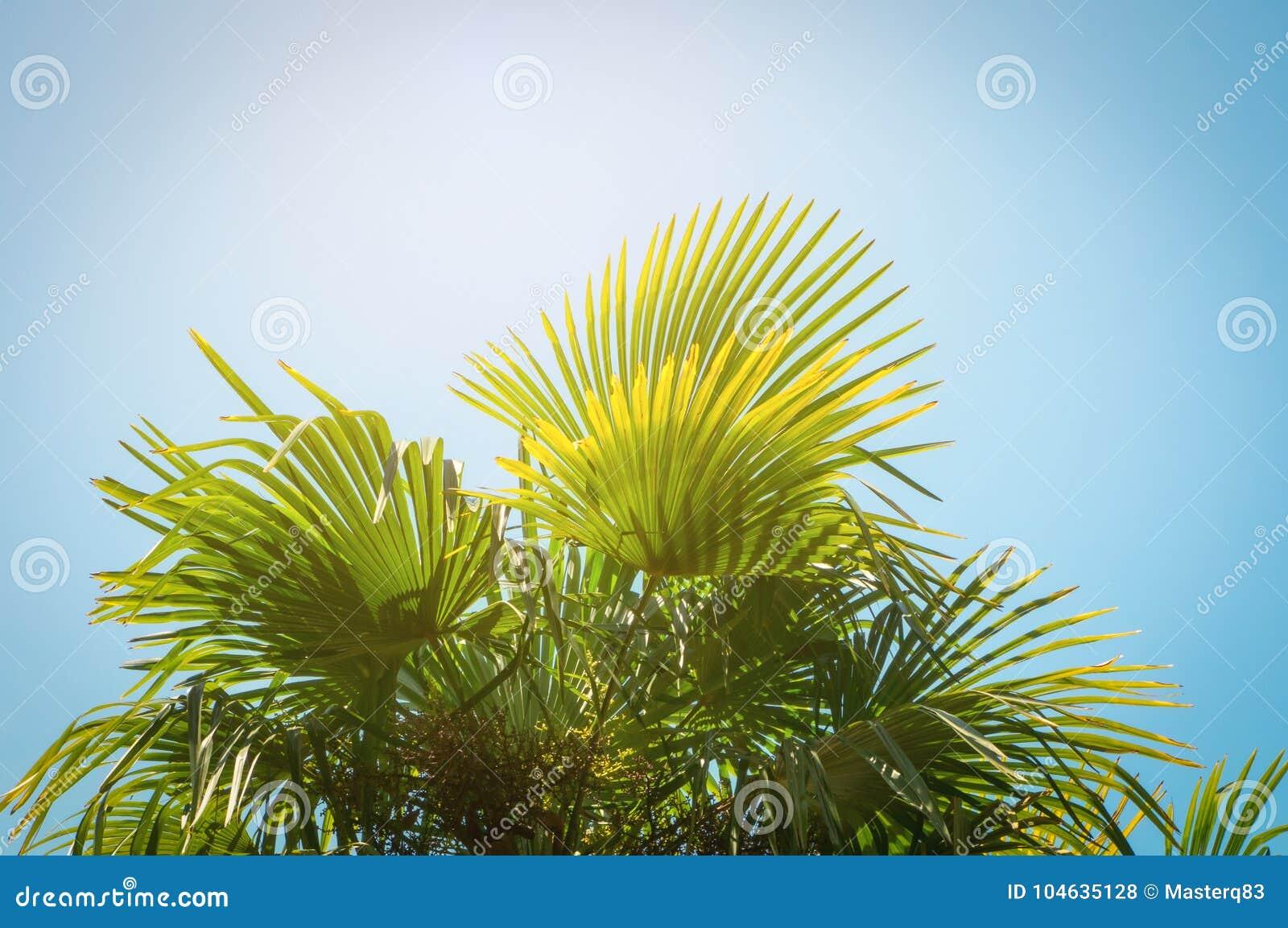 Download Tropische Boombladeren Bij Zonlicht Stock Foto - Afbeelding bestaande uit toevlucht, californië: 104635128