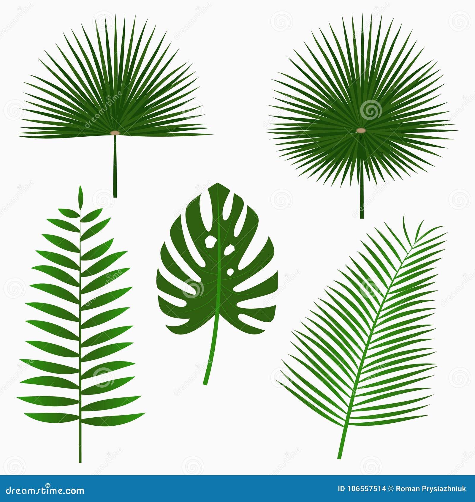 Tropische die palmbladen, de reeks van het wildernisblad op witte achtergrond wordt geïsoleerd Uitheemse gewassen Vector