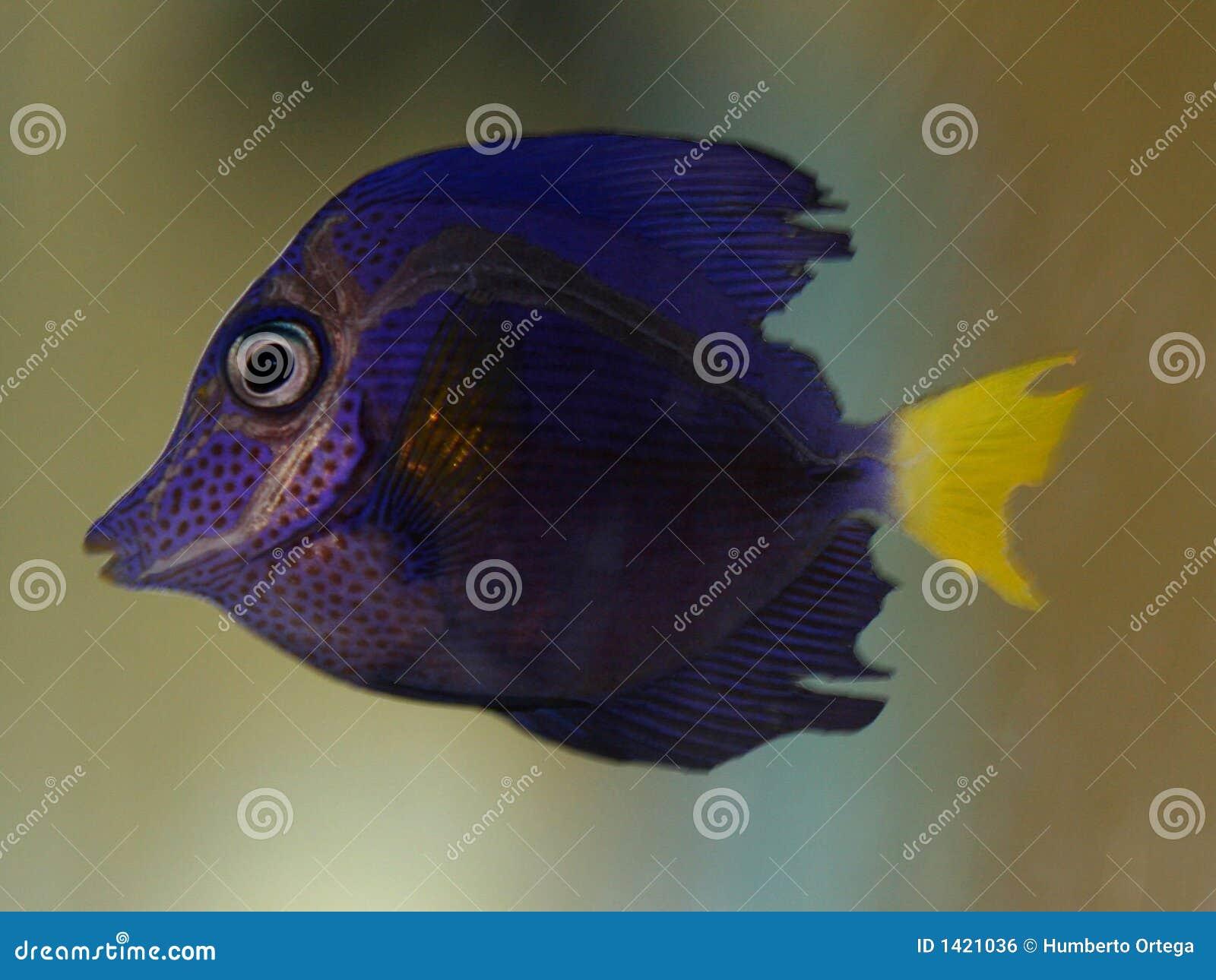 Tropische Fische