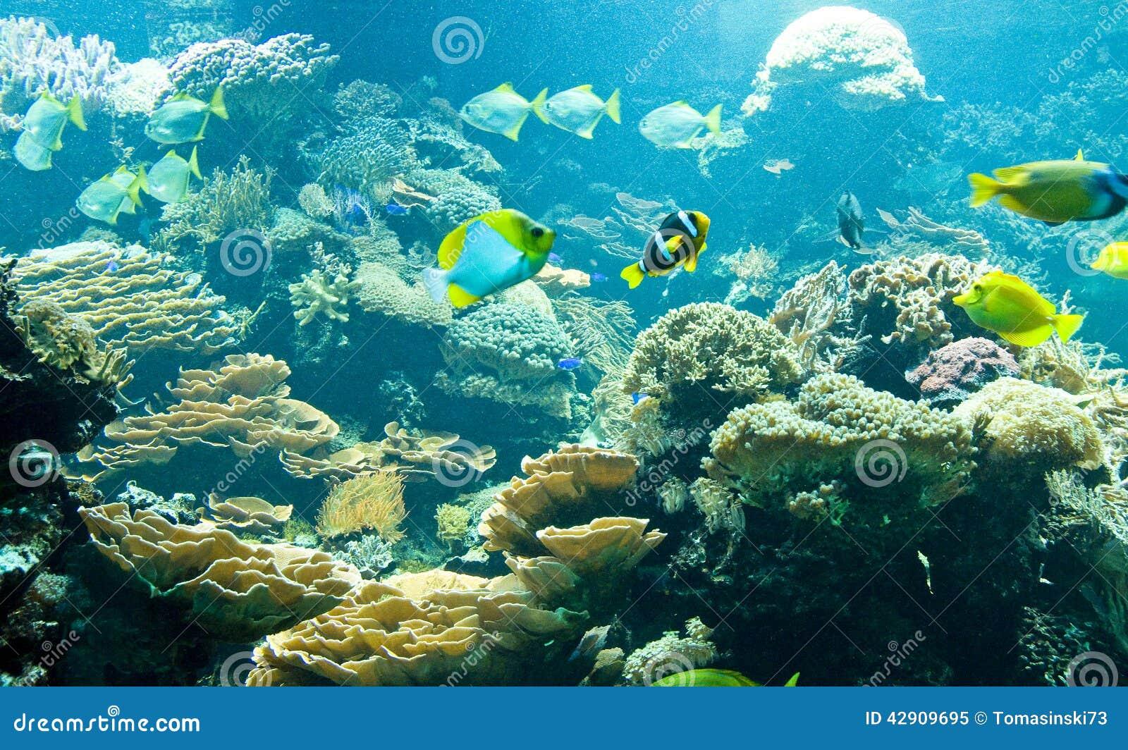 Tropische fische in seinem lebensraum stockfoto bild for Lebensraum fische