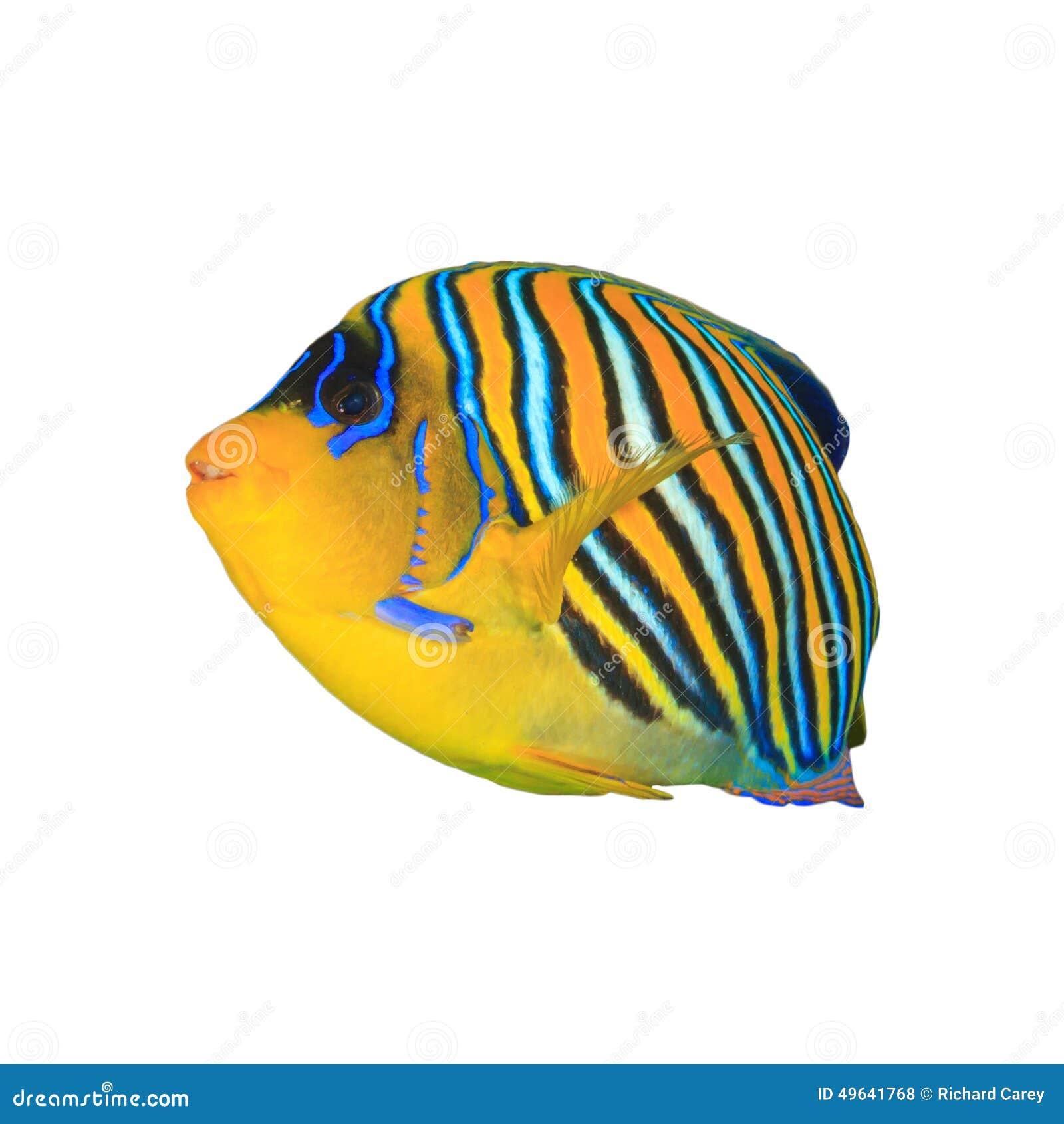 Tropische geïsoleerde vissen