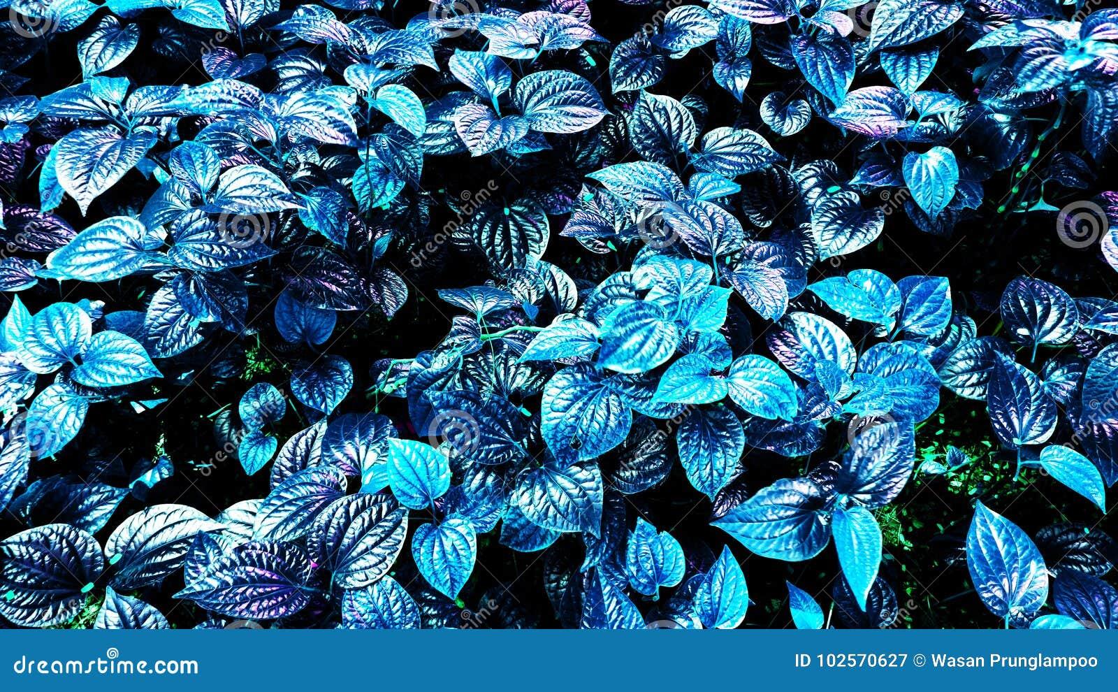 Tropische gloeiende bladeren
