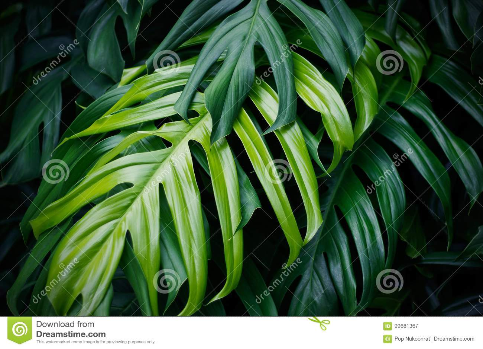 Tropische grüne Blätter, Natursommer-Waldanlage