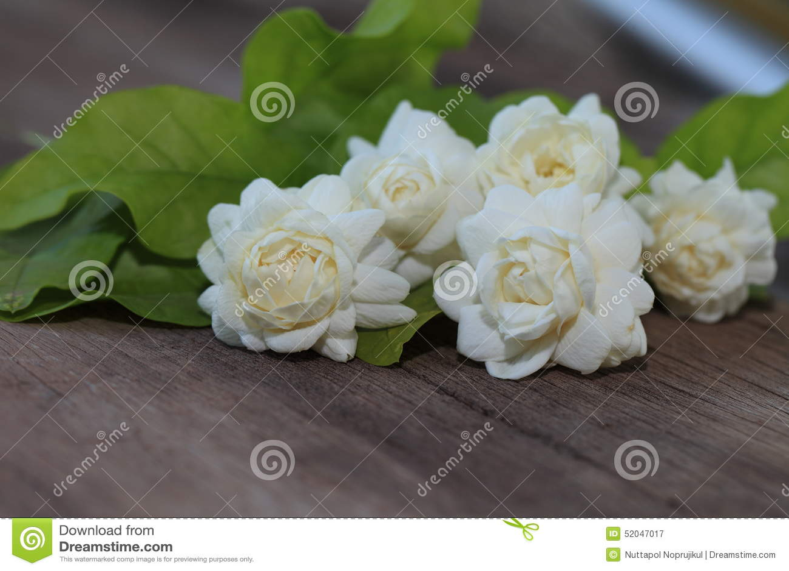 Tropische jasmijnbloem op hout Jasmijnbloemen en bladeren op br
