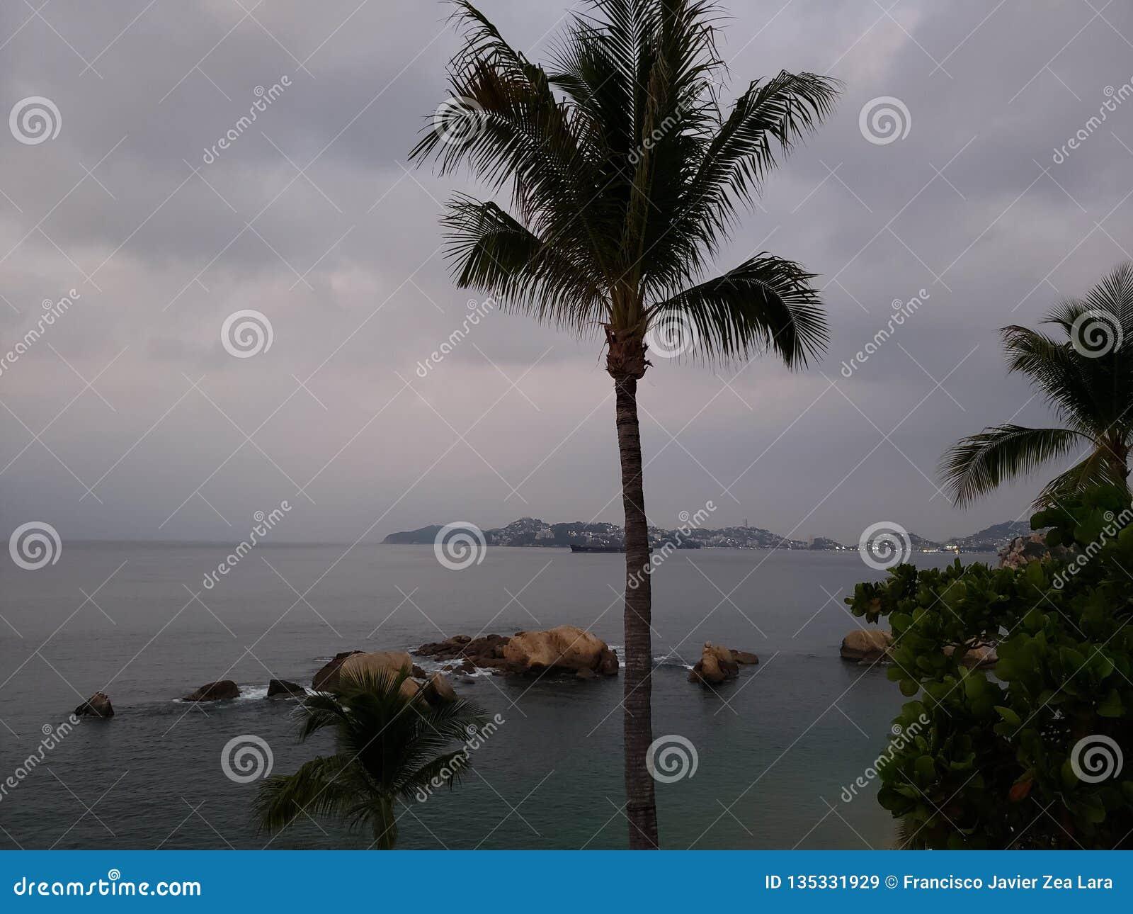 Tropische Landschaft mit dem Schattenbild einer Palme an einem bewölkten Tag