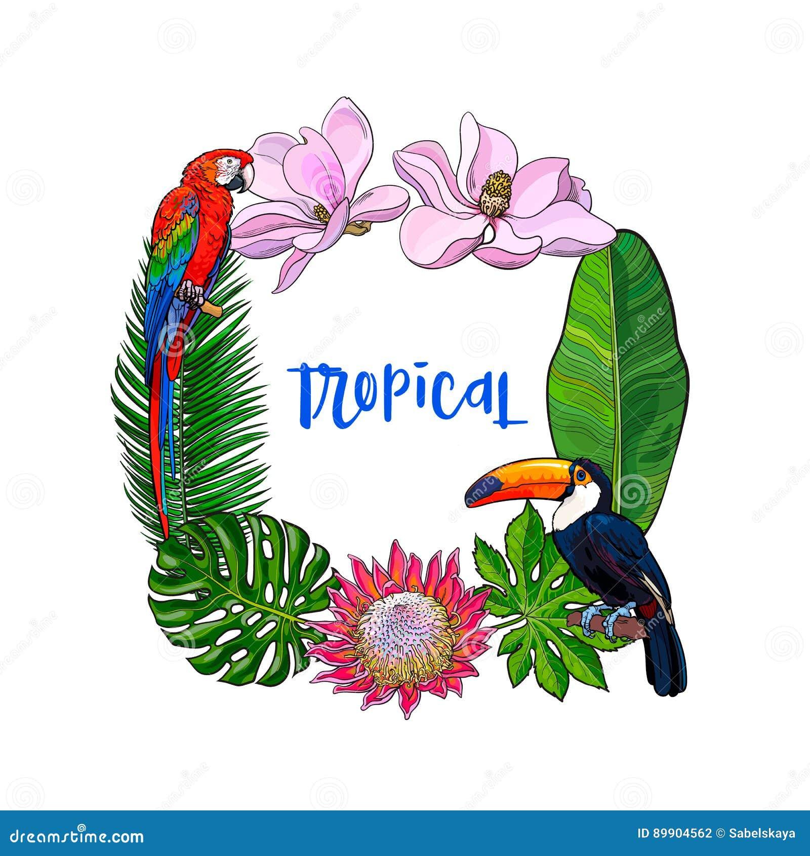 Tropische Palmblätter, Vögel, Blüht Quadratischen Rahmen, Platz Für ...