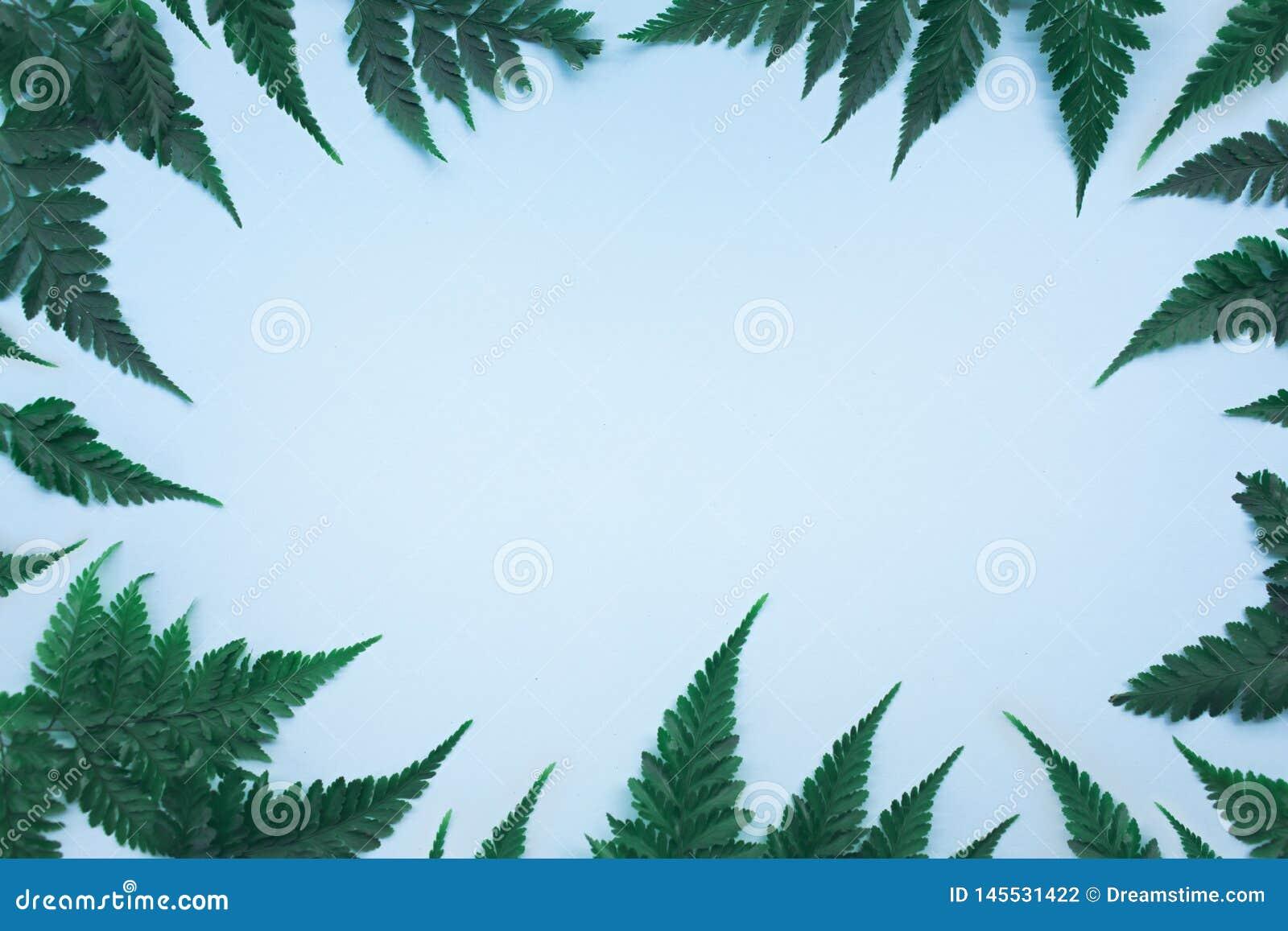 Tropische Palmbl?tter auf blauem Hintergrund