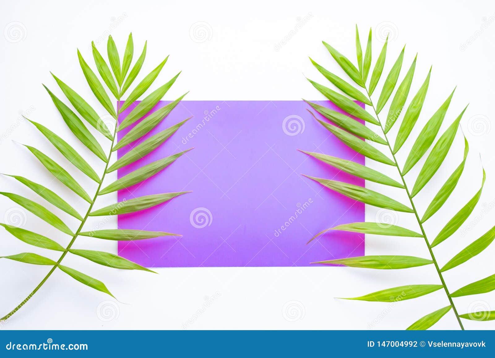 Tropische Palmbl?tter auf lila und purpurrotem Hintergrund Minimales Konzept Sommer in der Art Genommen an einem sonnigen Tag Tro