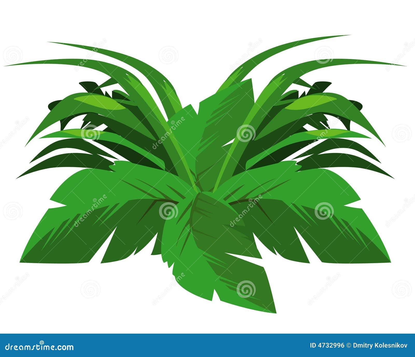 Tropische struik royalty vrije stock afbeelding afbeelding 4732996 - Bush architectuur ...
