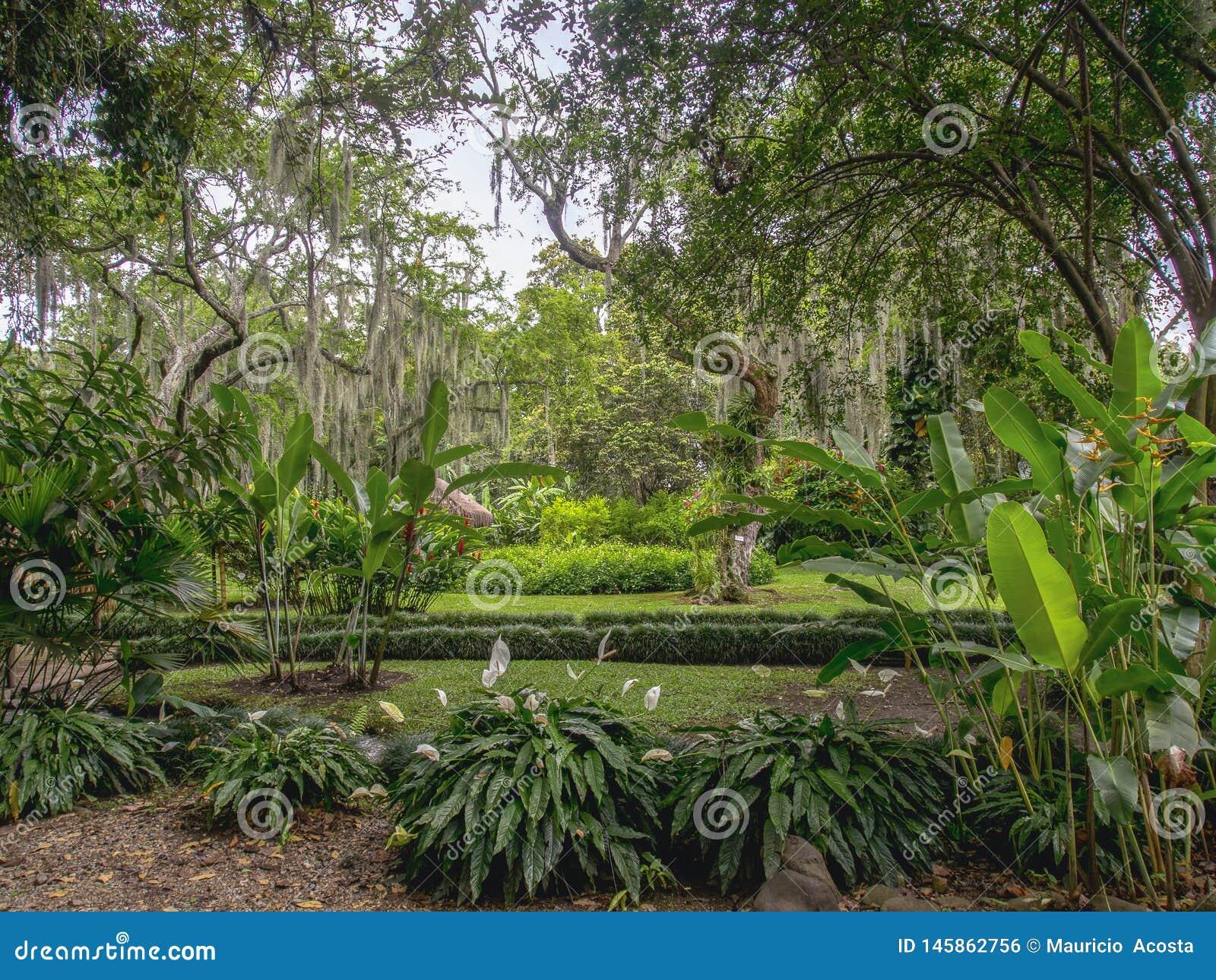 Tropische tuin typisch van het warme klimaat
