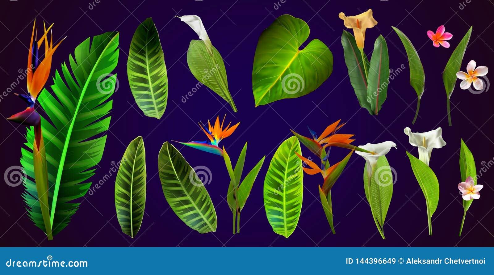 Tropische vectorbloemen kaart met bloemenillustratie Boeket van bloemen met exotisch Blad dat op witte achtergrond wordt geïsolee