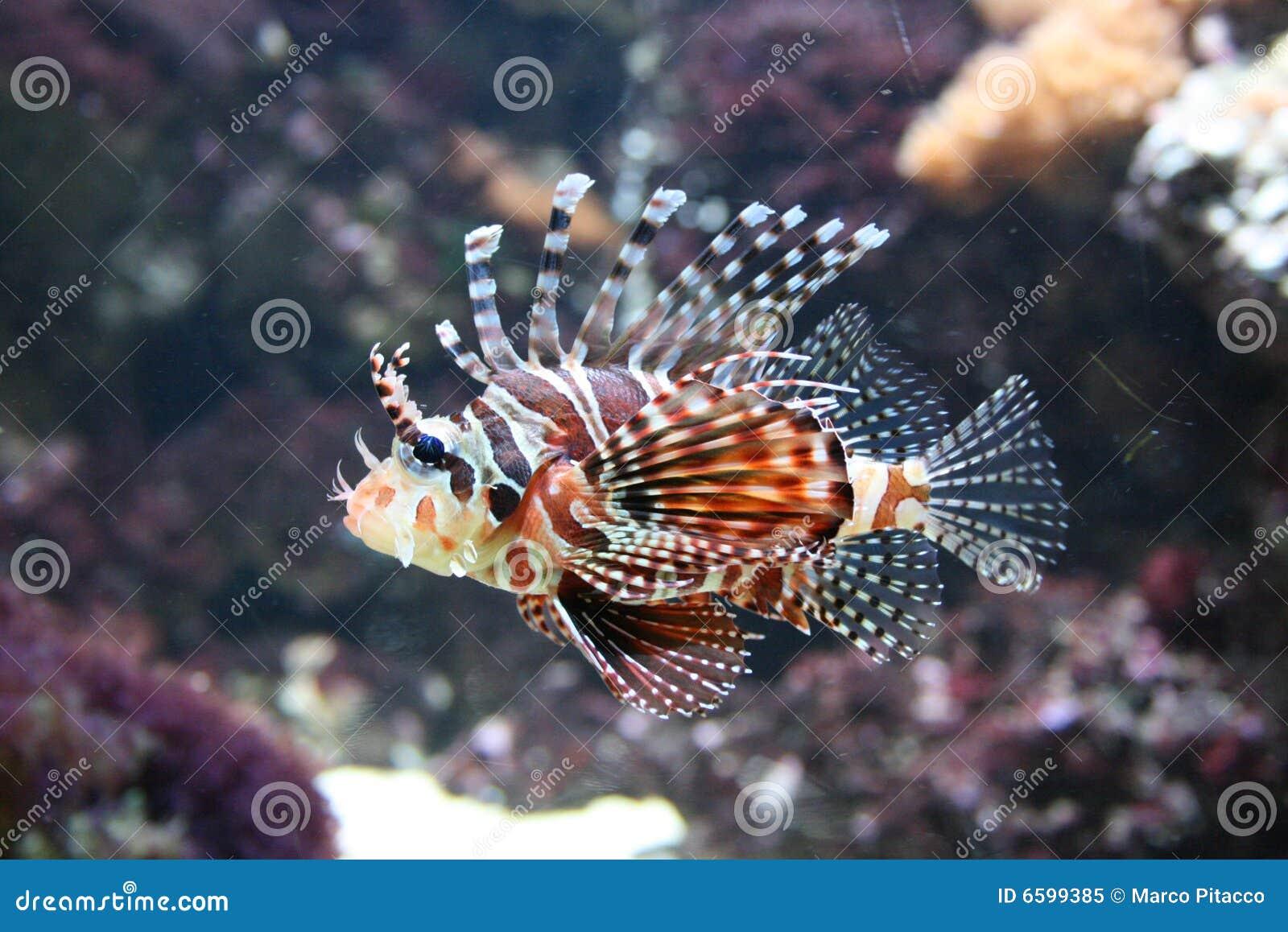 Tropische Vissen In Aquarium Royalty vrije Stock Foto   Afbeelding  6599385