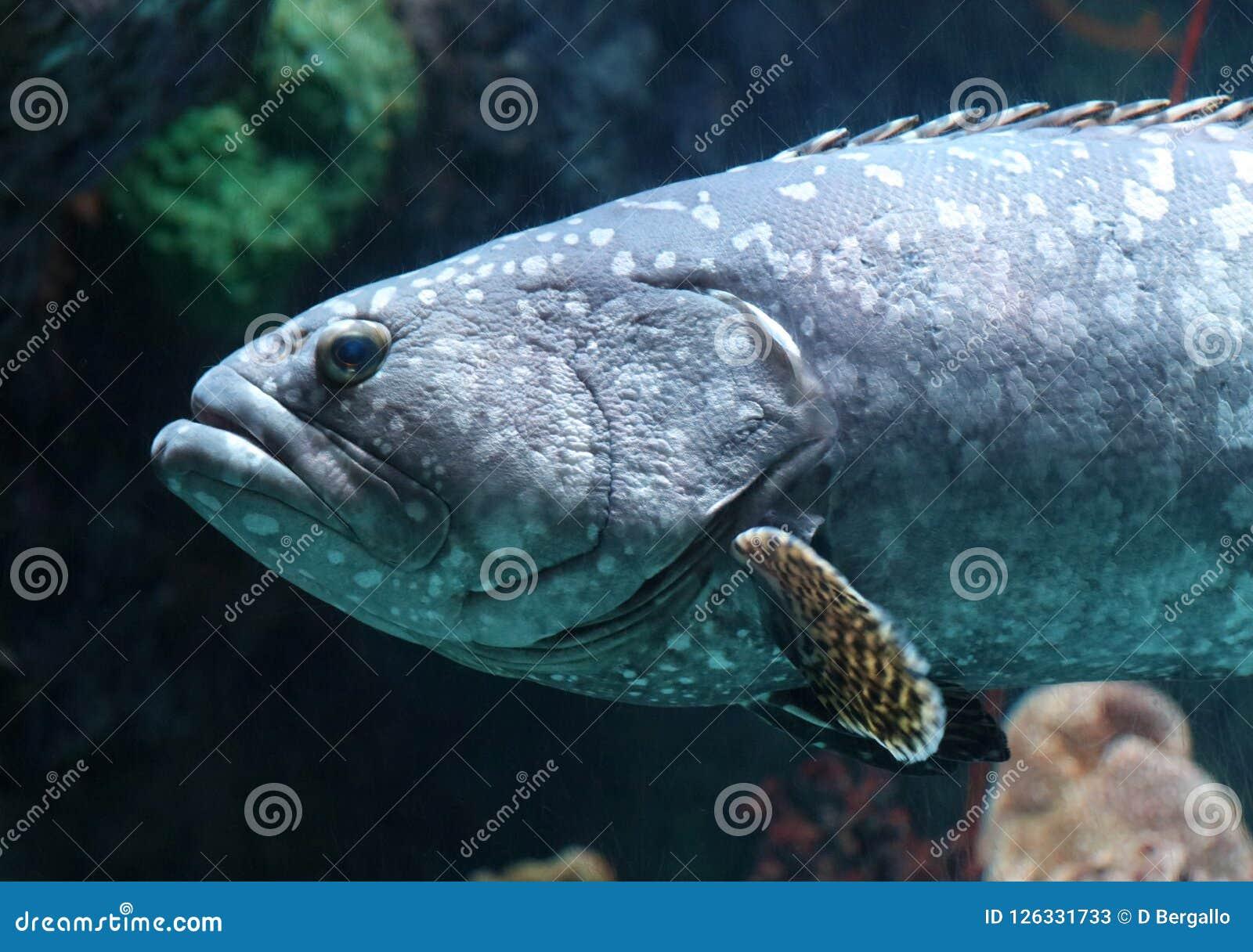 Tropische vissen in aquarium bij oceaan, overzees zout schepsel