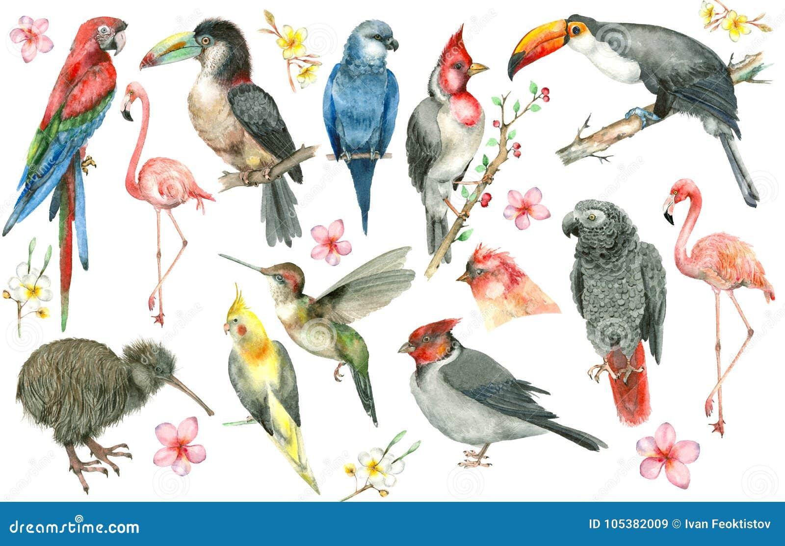 Tropische vogelreeks