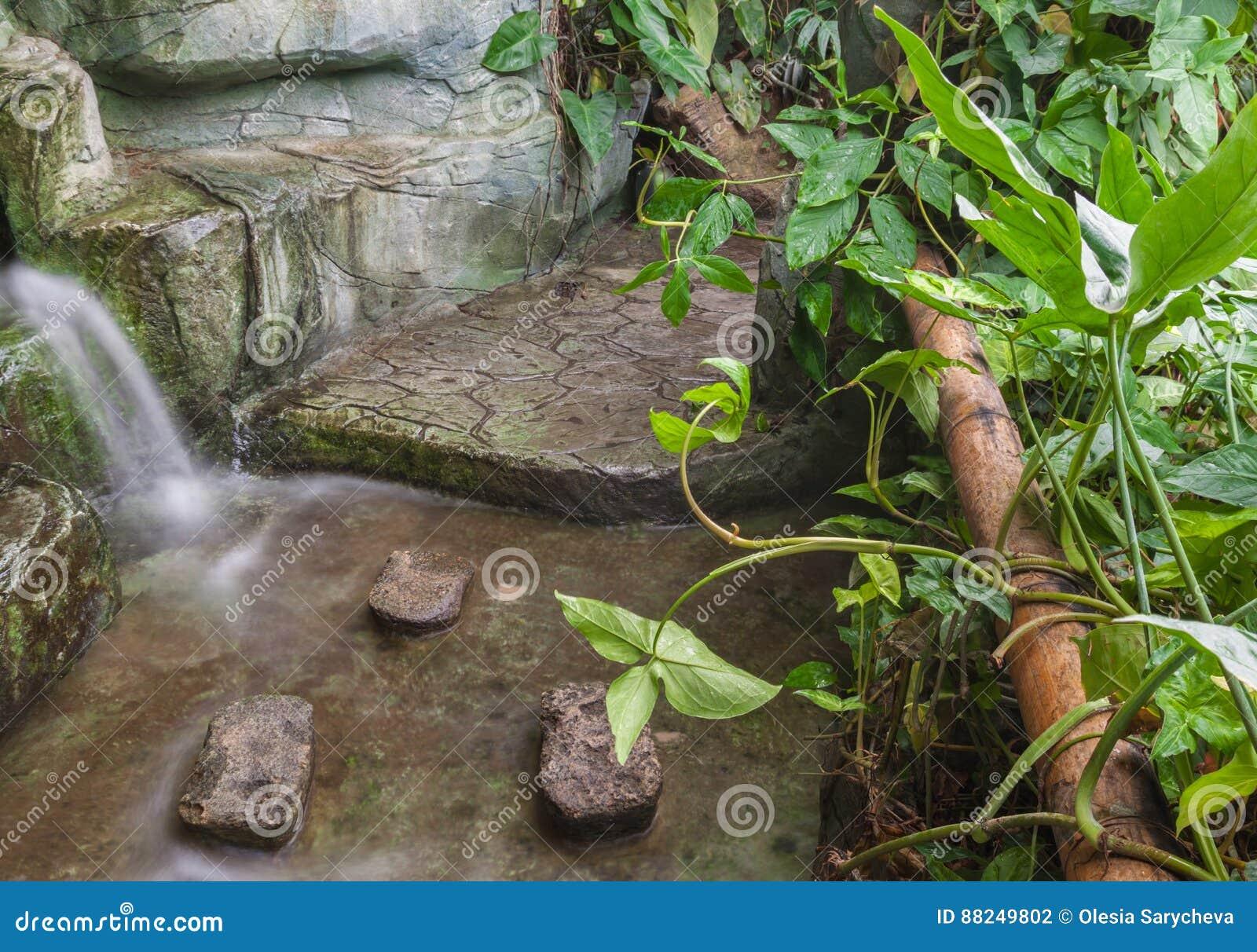 Tropische Zone Im Gewachshaus Stockfoto Bild Von Gewachshaus Pool