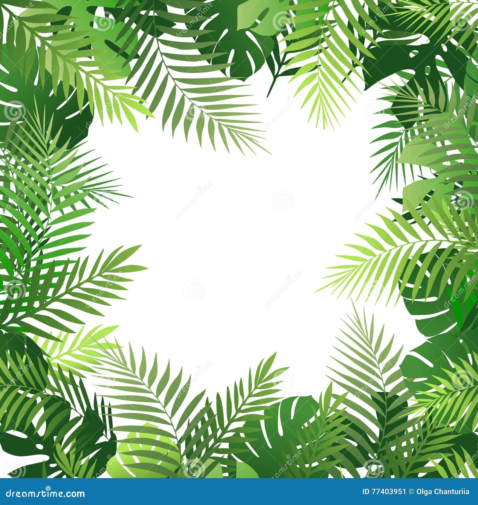 Tropischer Hintergrund Des Sommers Mit Palmblättern Exotische Tapete ...