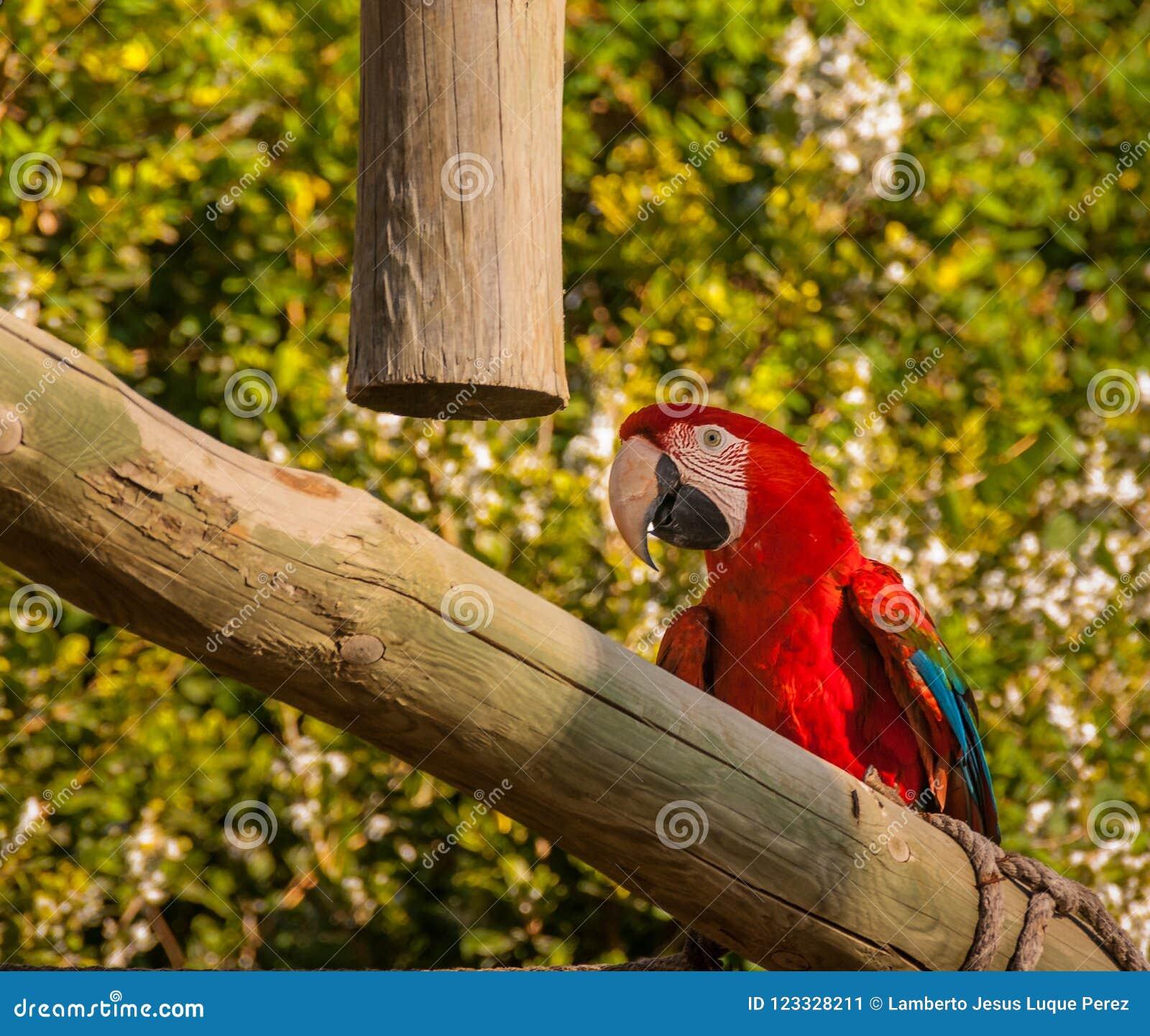 Tropischer Keilschwanzsittichvogel in einem Schulungszentrum