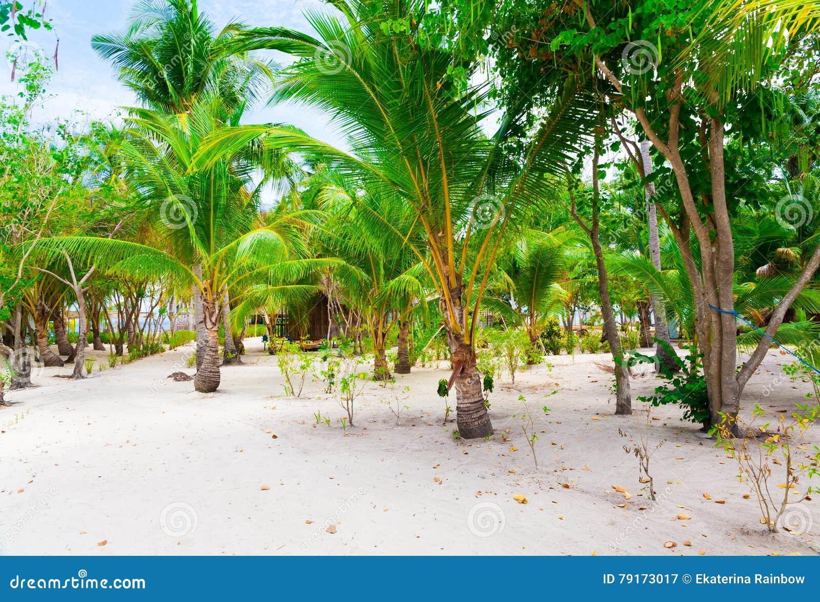 tropischer meer strand philippinen palmen arbeiten im. Black Bedroom Furniture Sets. Home Design Ideas