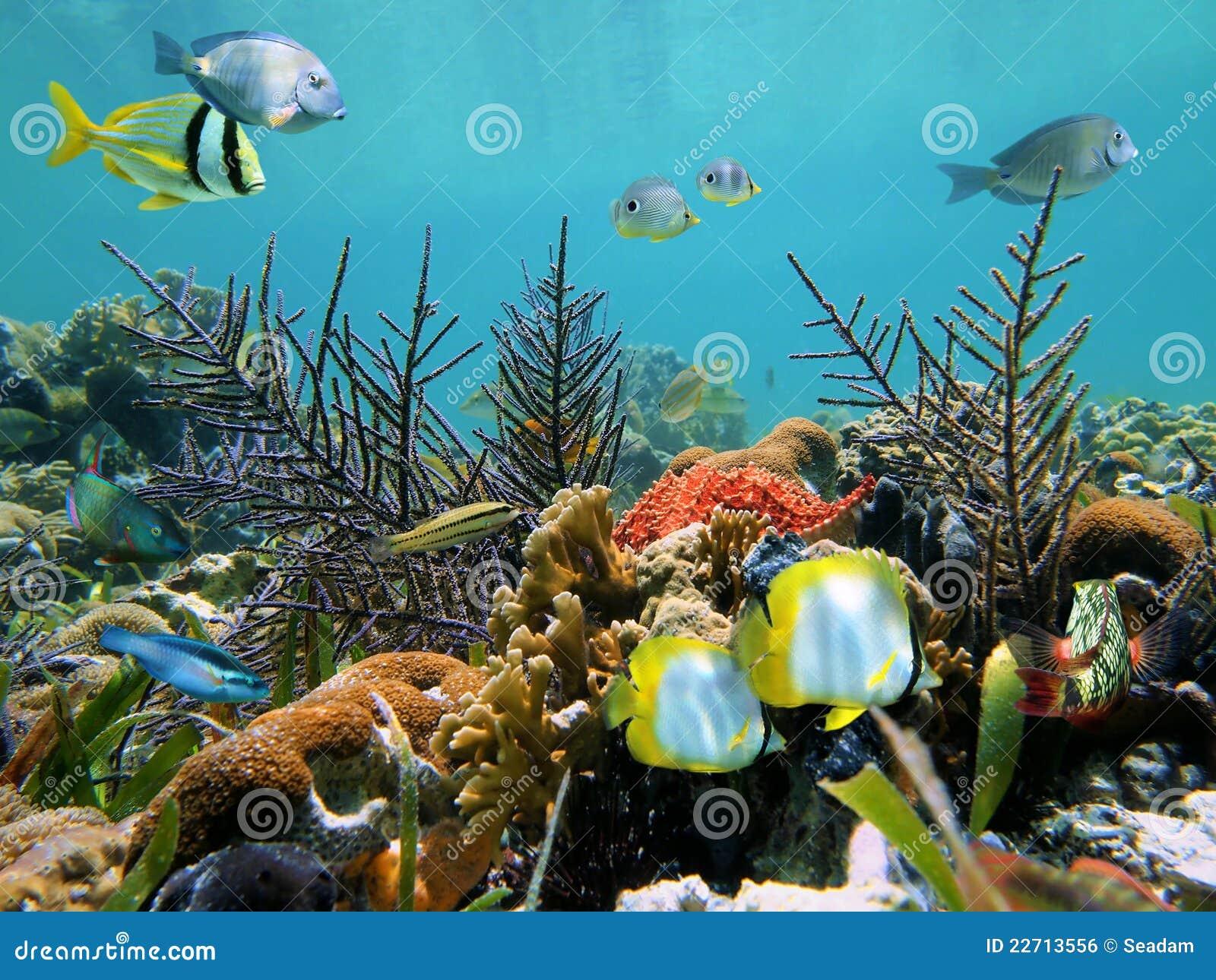 Tropischer Meeresgrund