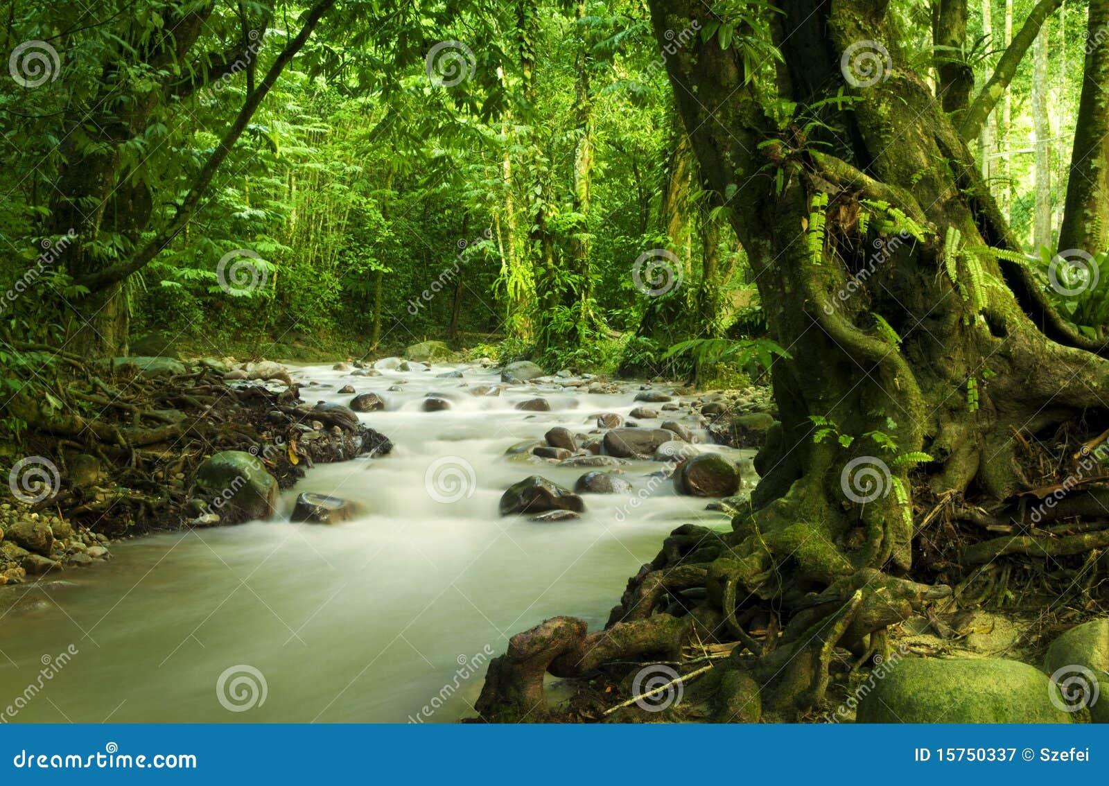 Tropischer Regenwald und Fluss