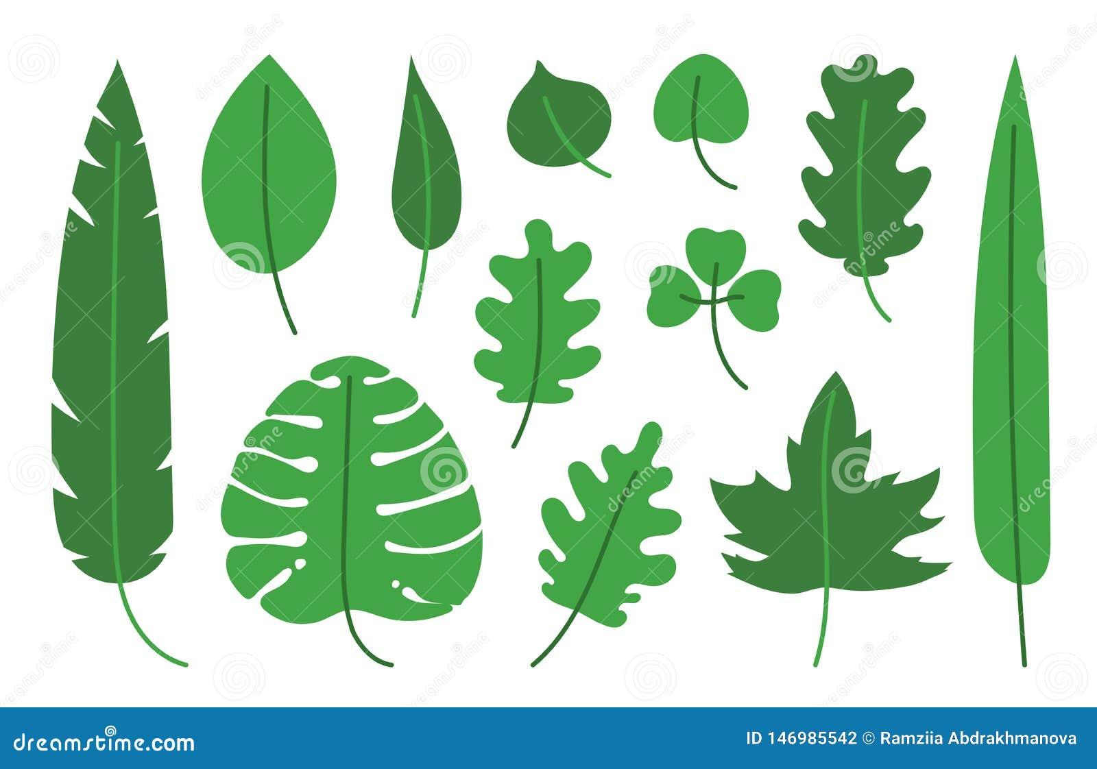 Tropischer Satz Handgezogene Vektor-Blattillustration Blätter des Ahorns, der Birke, des monstera, der Banane, der Palme, des Tee